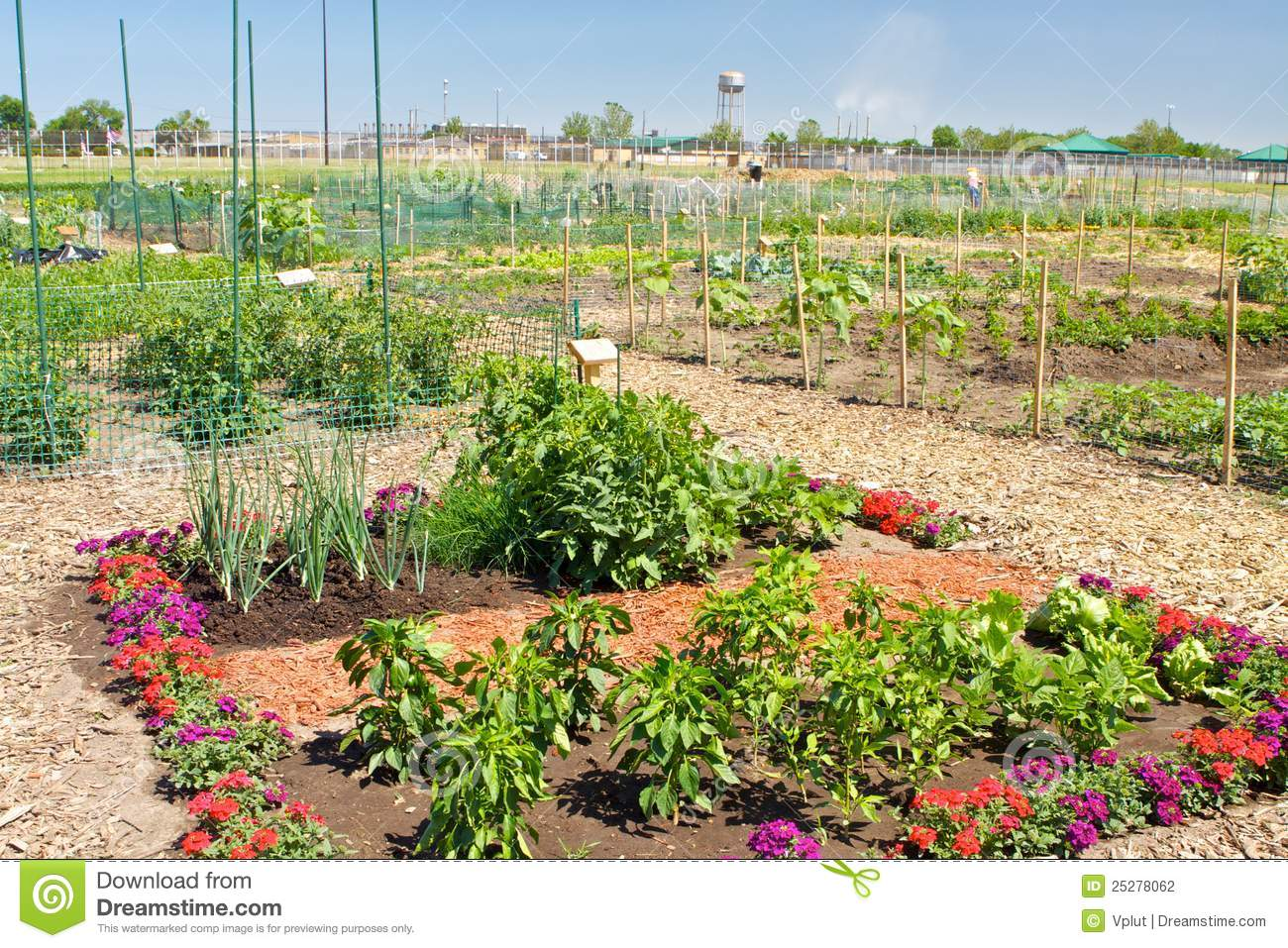 Community Garden Plot Stock Photography Image 25278062
