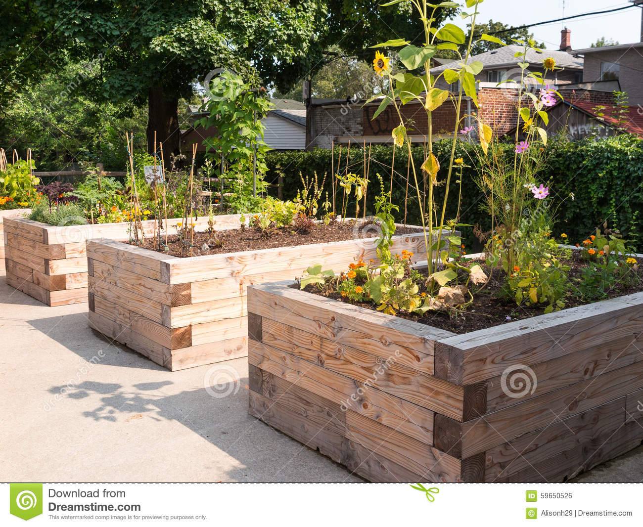 Stock Photo: Community Garden: dreamstime.com/stock-photo-community-garden-raised-beds...