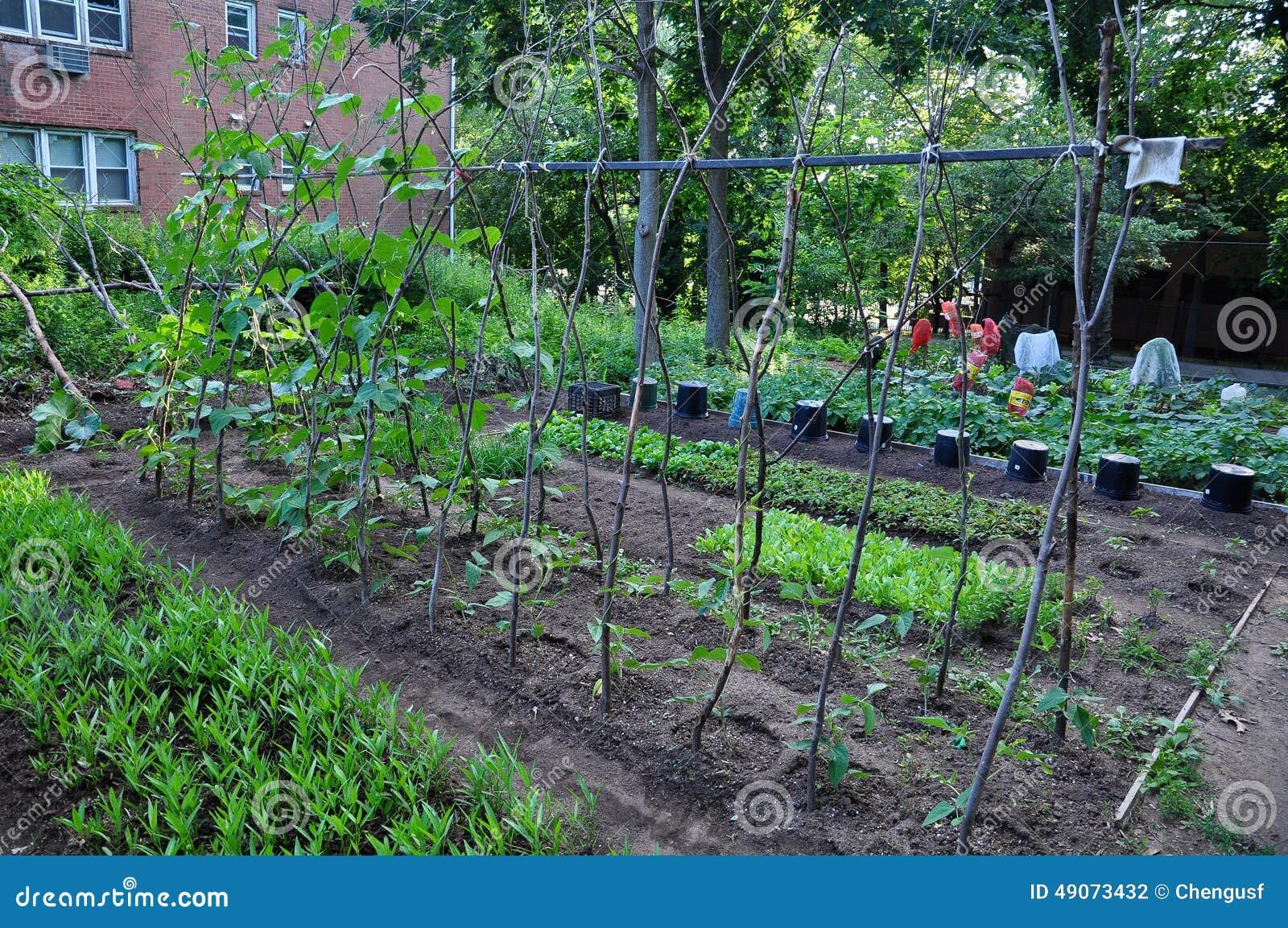 Community Vegetable Garden Stock Photo Image 49073432
