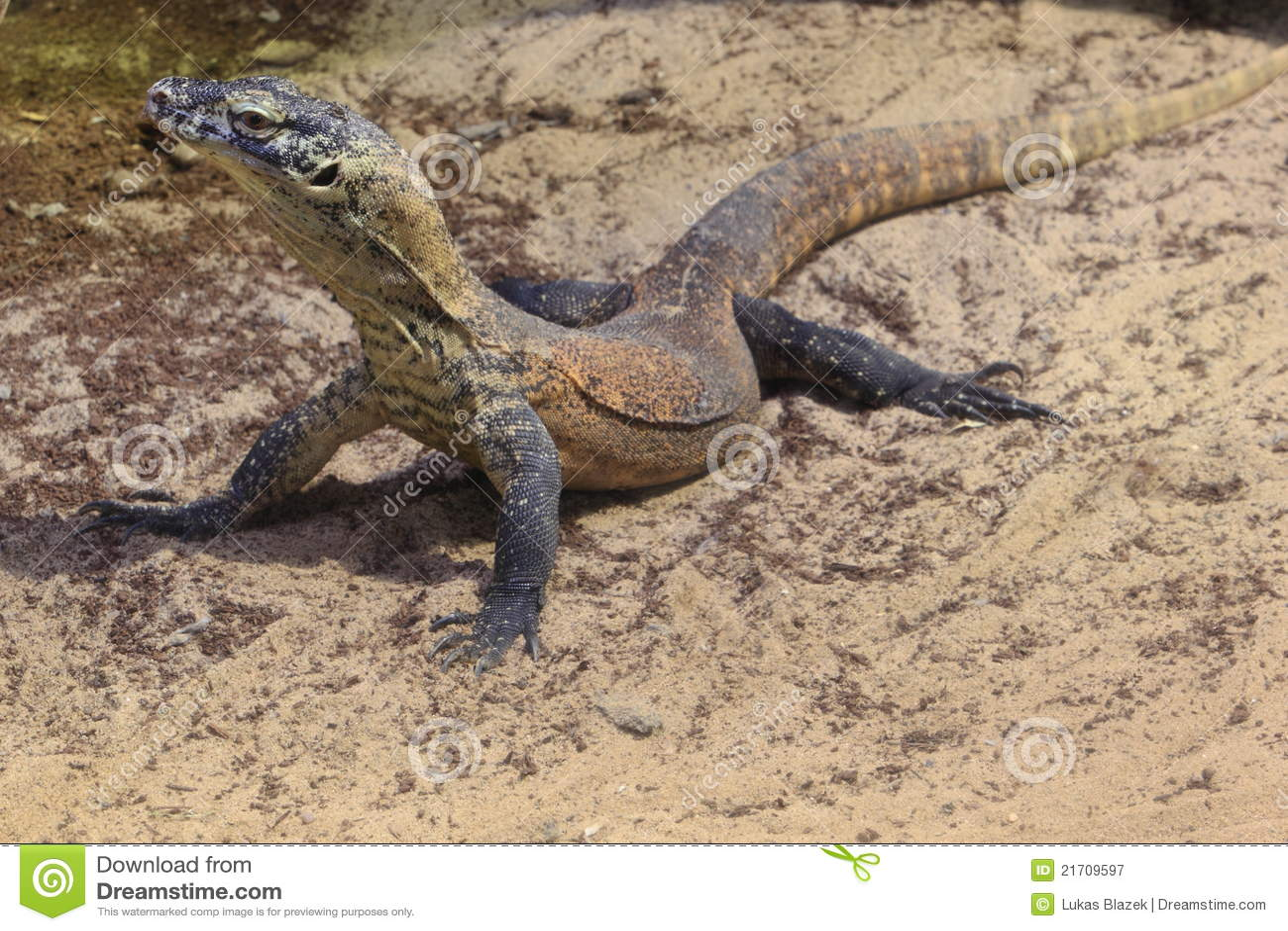 Comodo Dragon 3