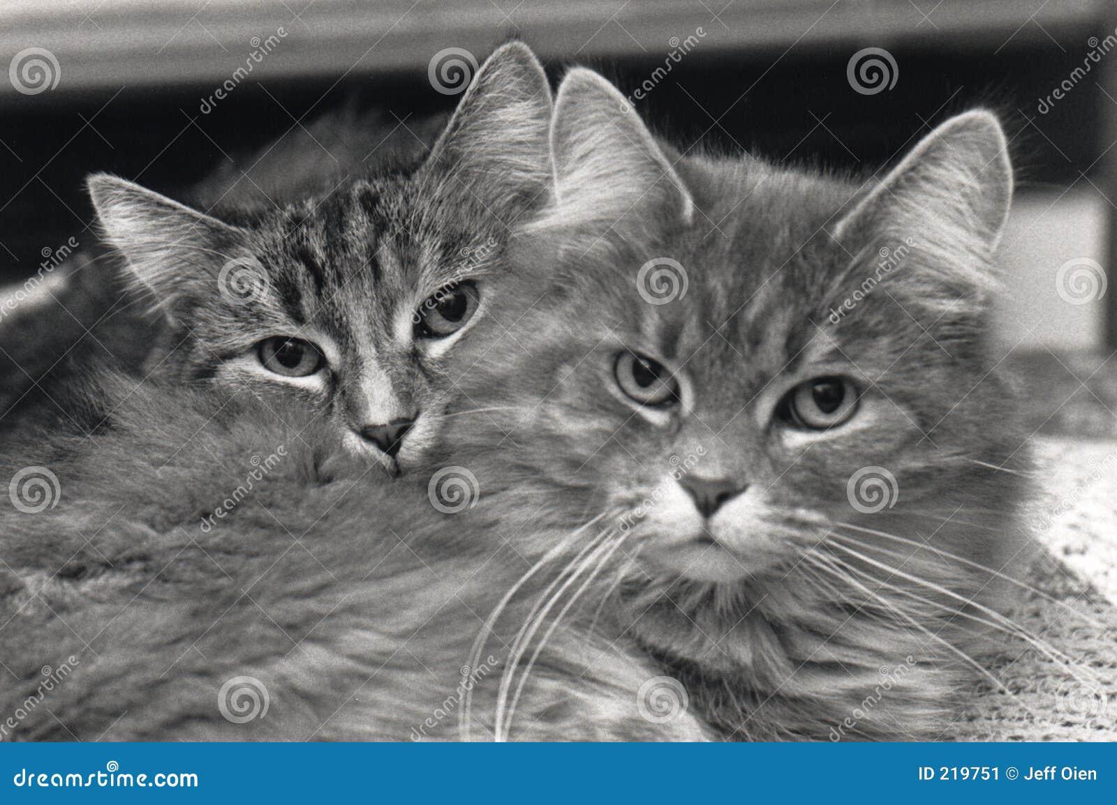 Compagni del gatto
