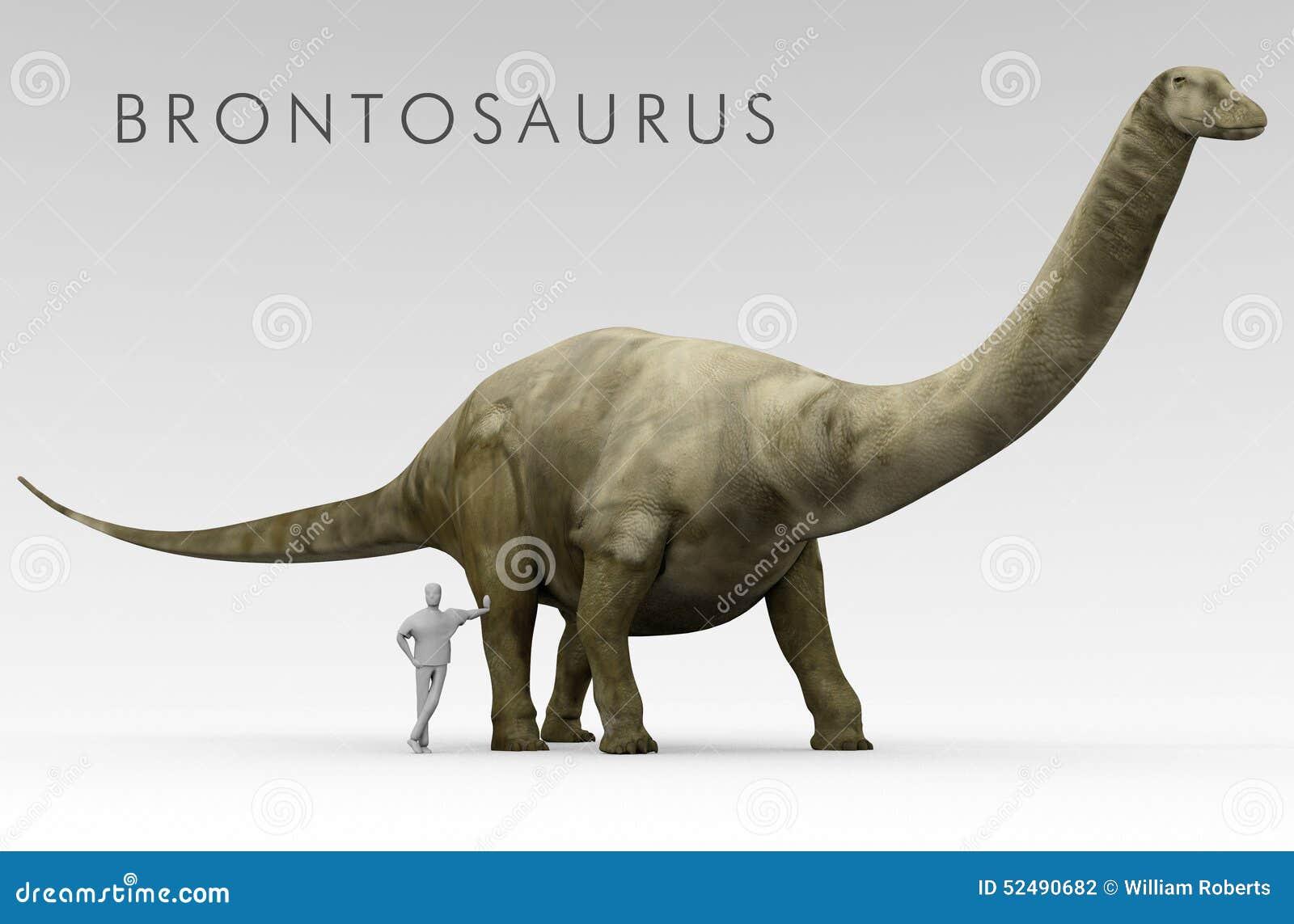 Comparaison de taille de brontosaure et d 39 humain de dinosaure illustratio - Taille coniferes periode ...