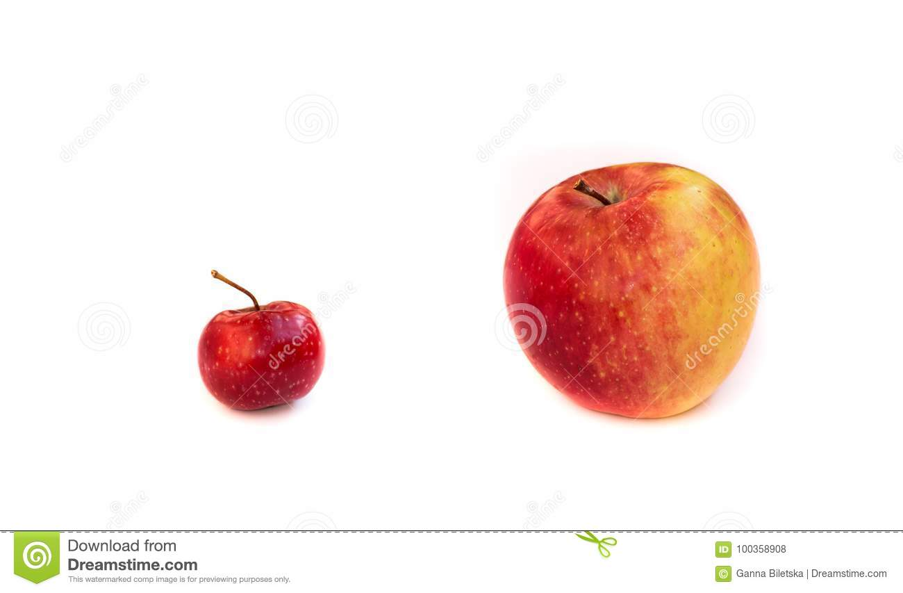 Comparison of a small red paradise apple and a large orange. Partners, competitors, the boss and the loyal.