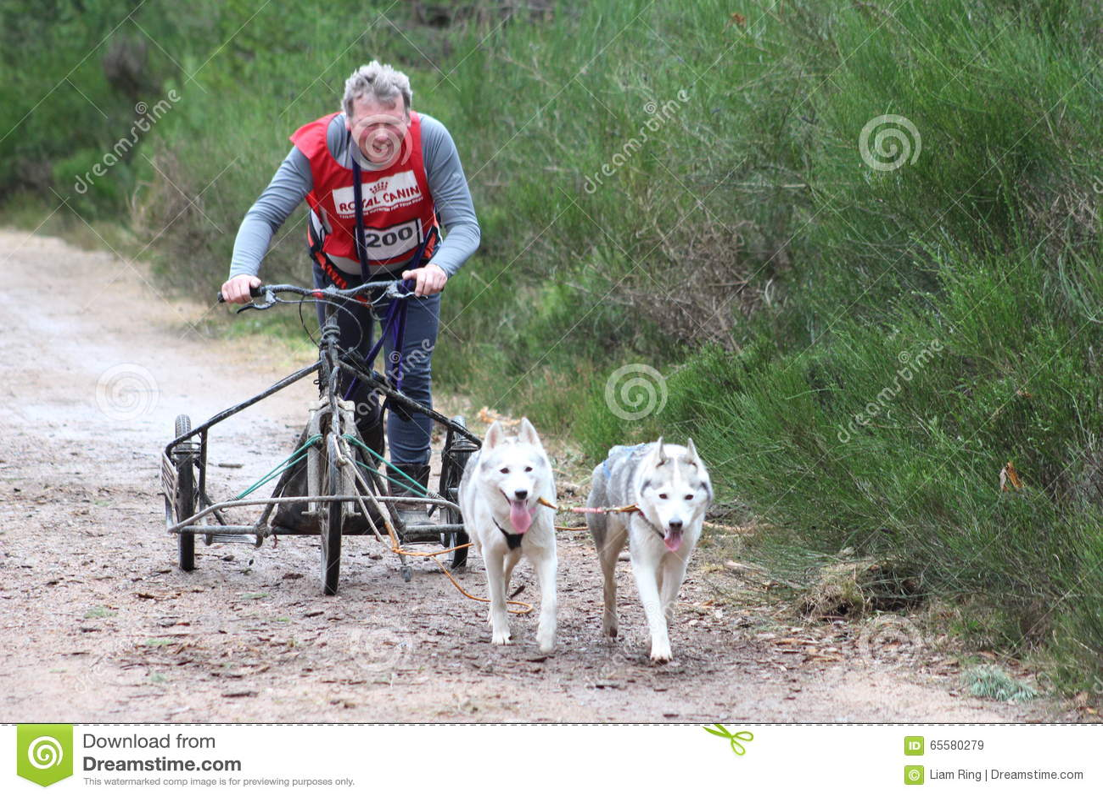 Competência do trenó do cão