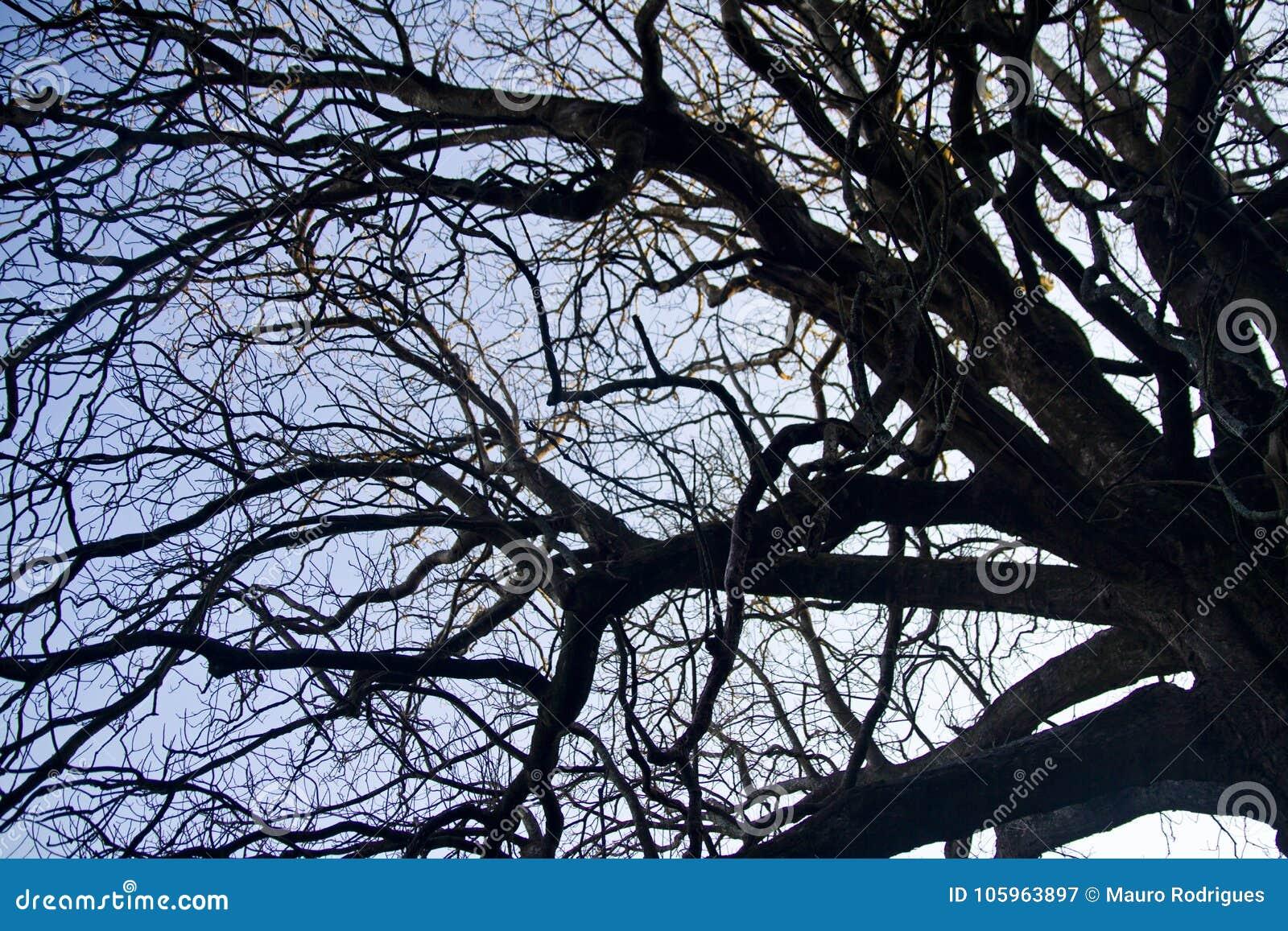Complexité sur des branches d arbre
