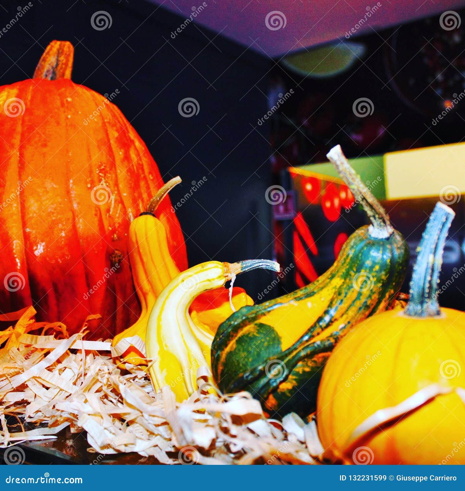 Composição de abóboras coloridas durante o período de Dia das Bruxas