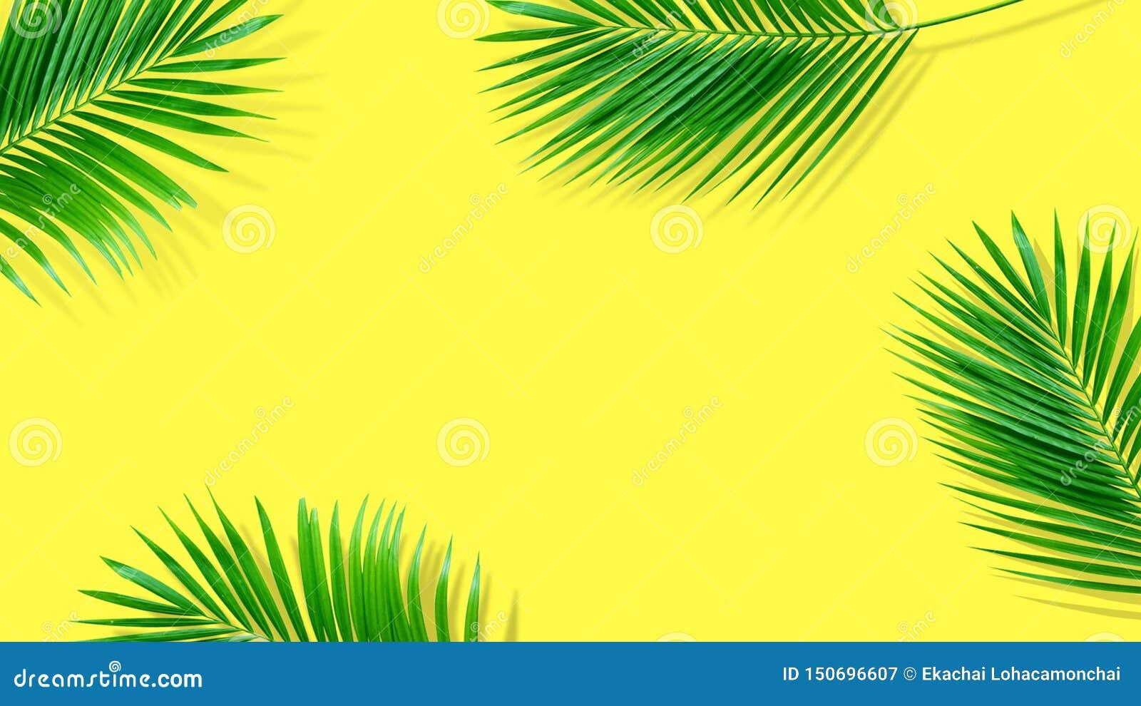 Composi??o do ver?o Folhas de palmeira tropicais no fundo amarelo ver?o