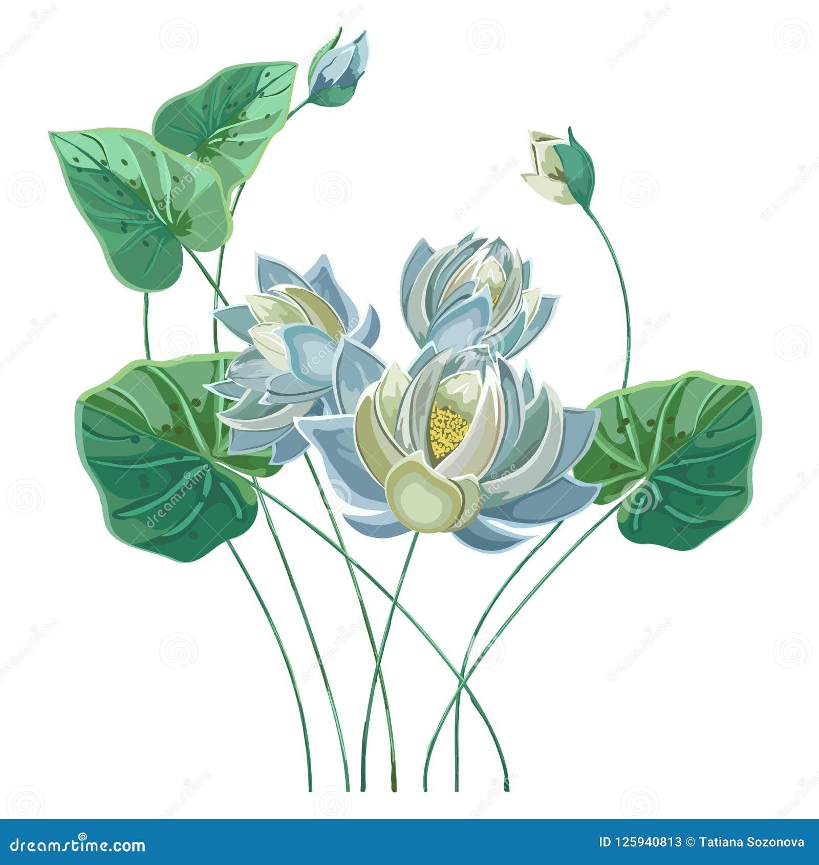 Composición De La Flor De Loto Azul Con Las Hojas Verdes Ilustración