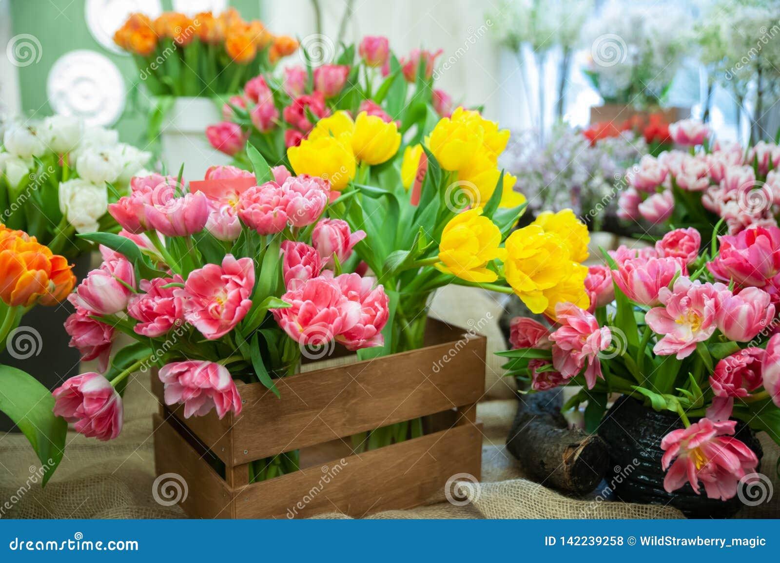 Composición floreciente hermosa de tulipanes coloridos, del fondo colorido brillante de la foto del tulipán, hola día de la prima