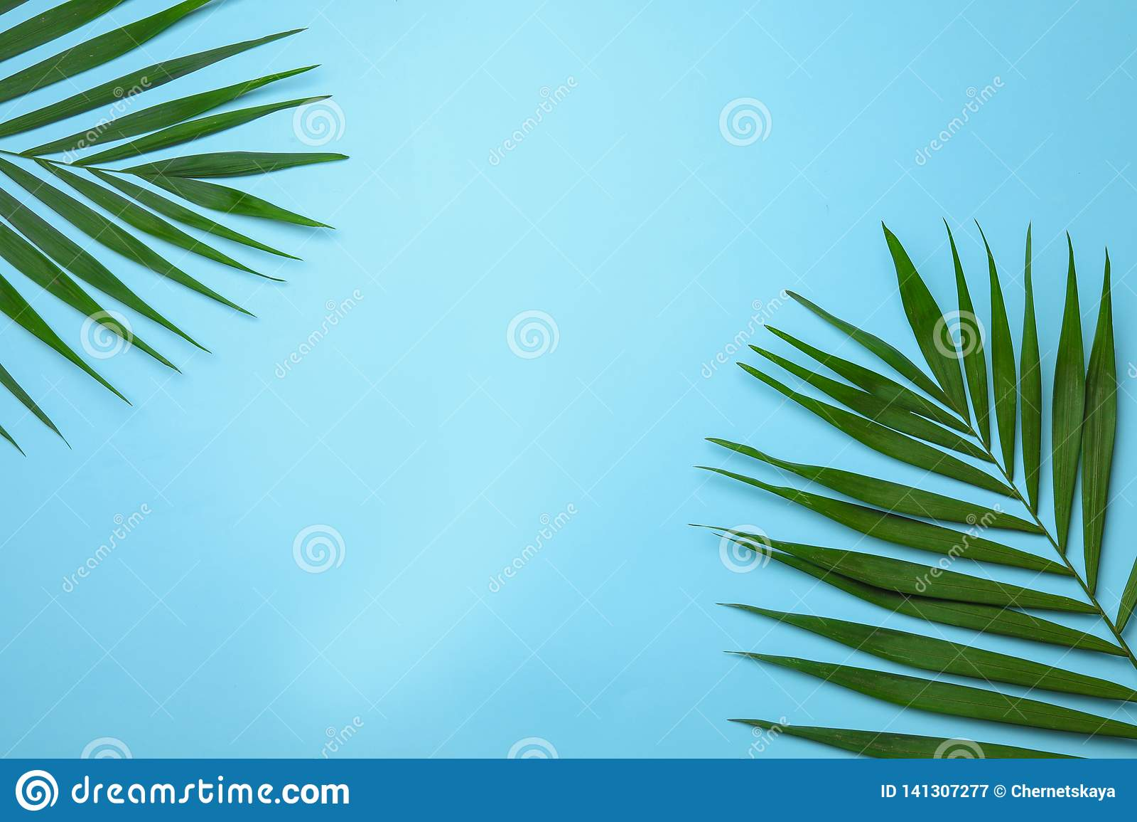 Composición puesta plana con las hojas de palma tropicales de la areca y espacio para el texto