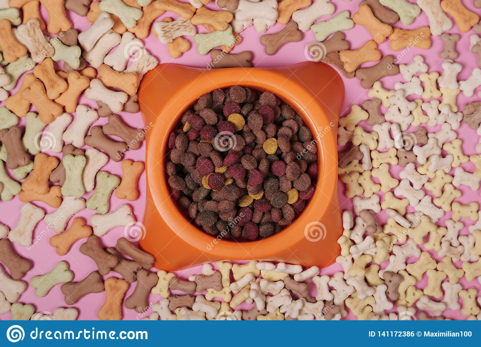 Composición puesta plana con los accesorios para el perro y el gato, comida seca, galletas, galletas, alimento para animales