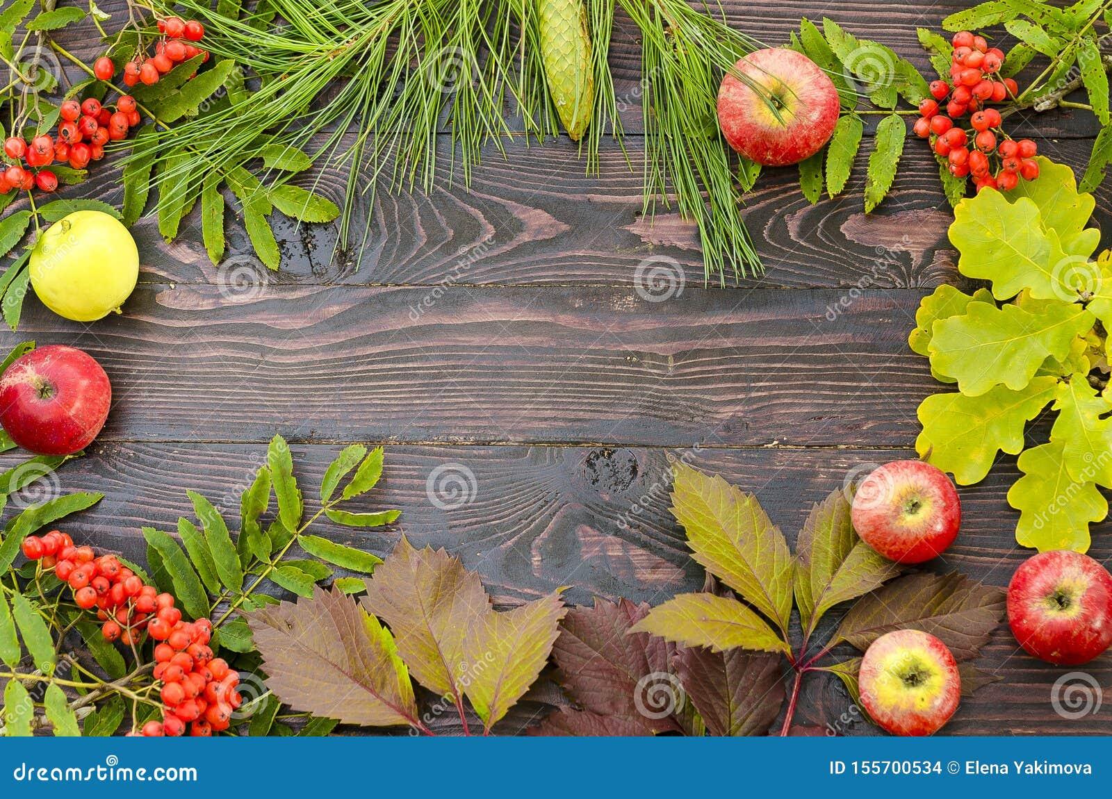 Composición puesta plana del otoño de hojas, de bayas y de manzanas en un fondo de madera con el espacio de la copia para el text