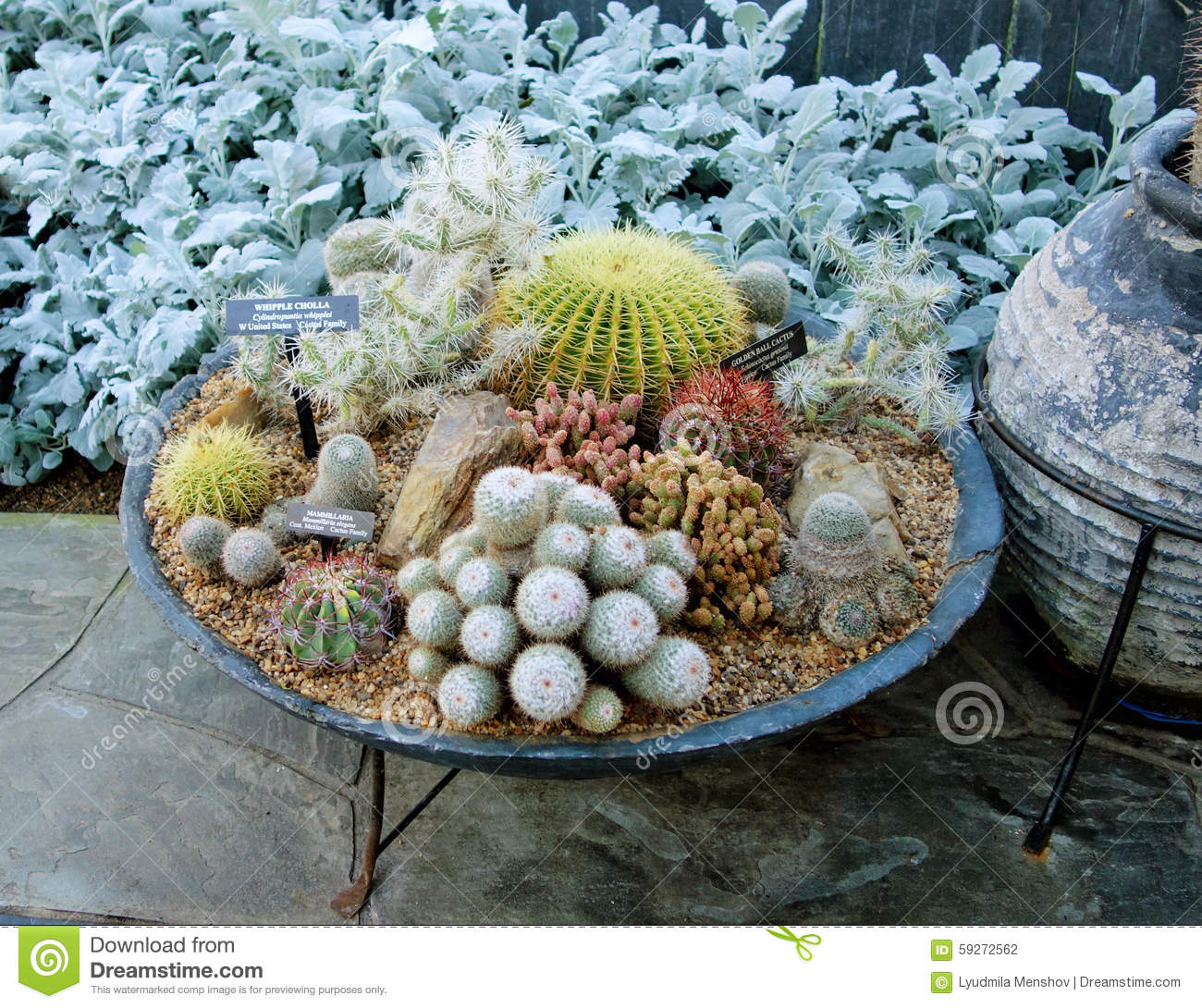 Composition With Cactus In The Greenhouse Stock Photo