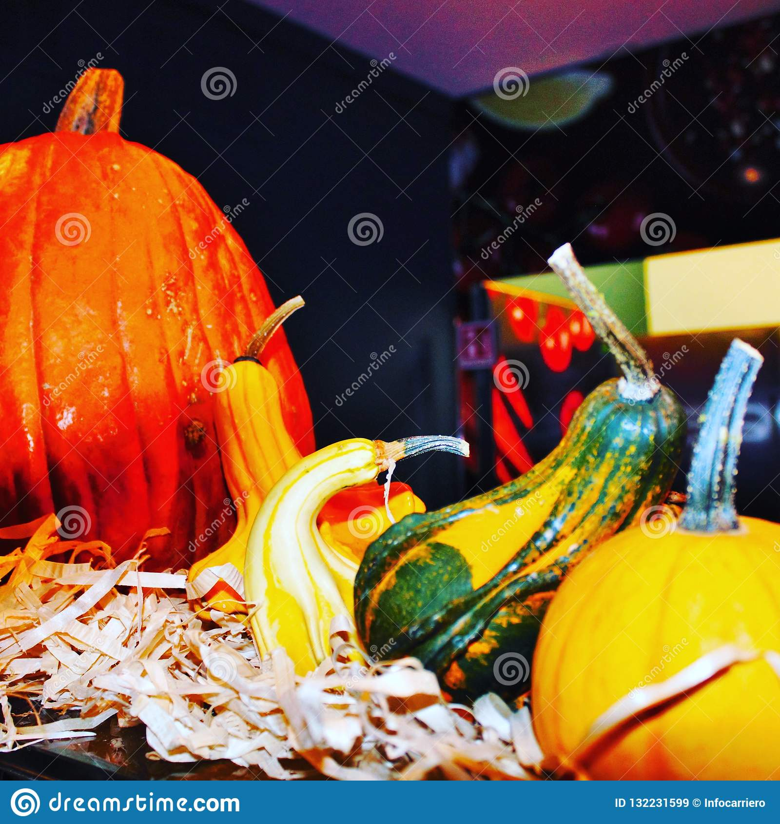 composition of colored pumpkins during the Halloween period.