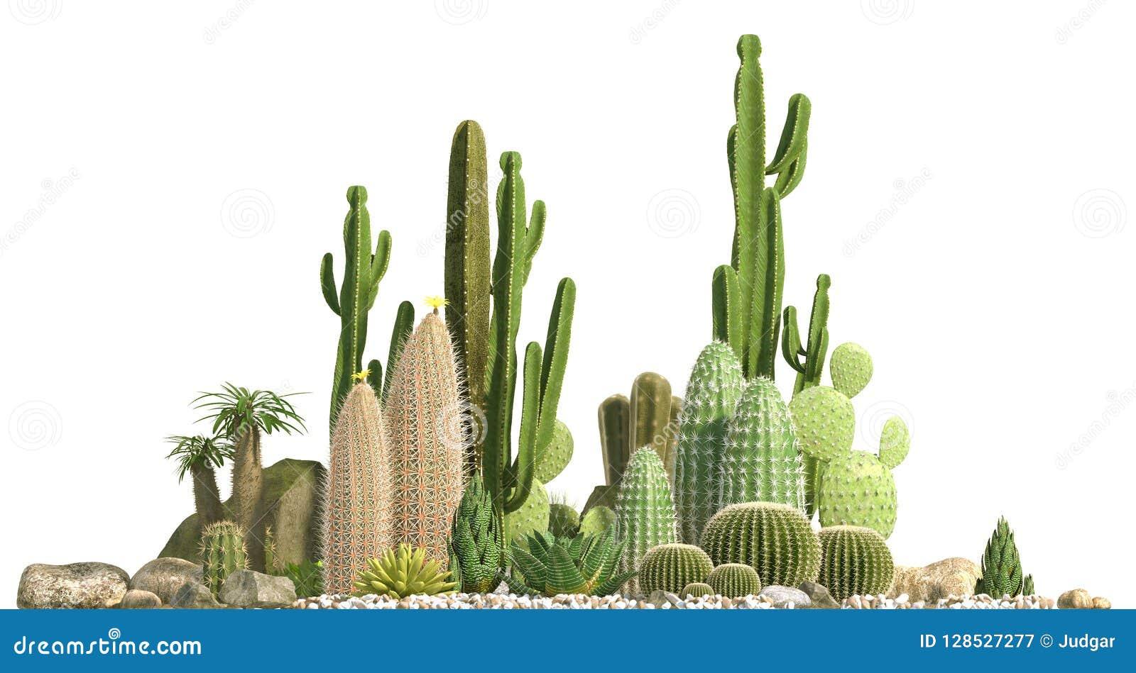Composition décorative composée de groupes de différentes espèces de cactus, d aloès et d usines succulentes d isolement sur le f