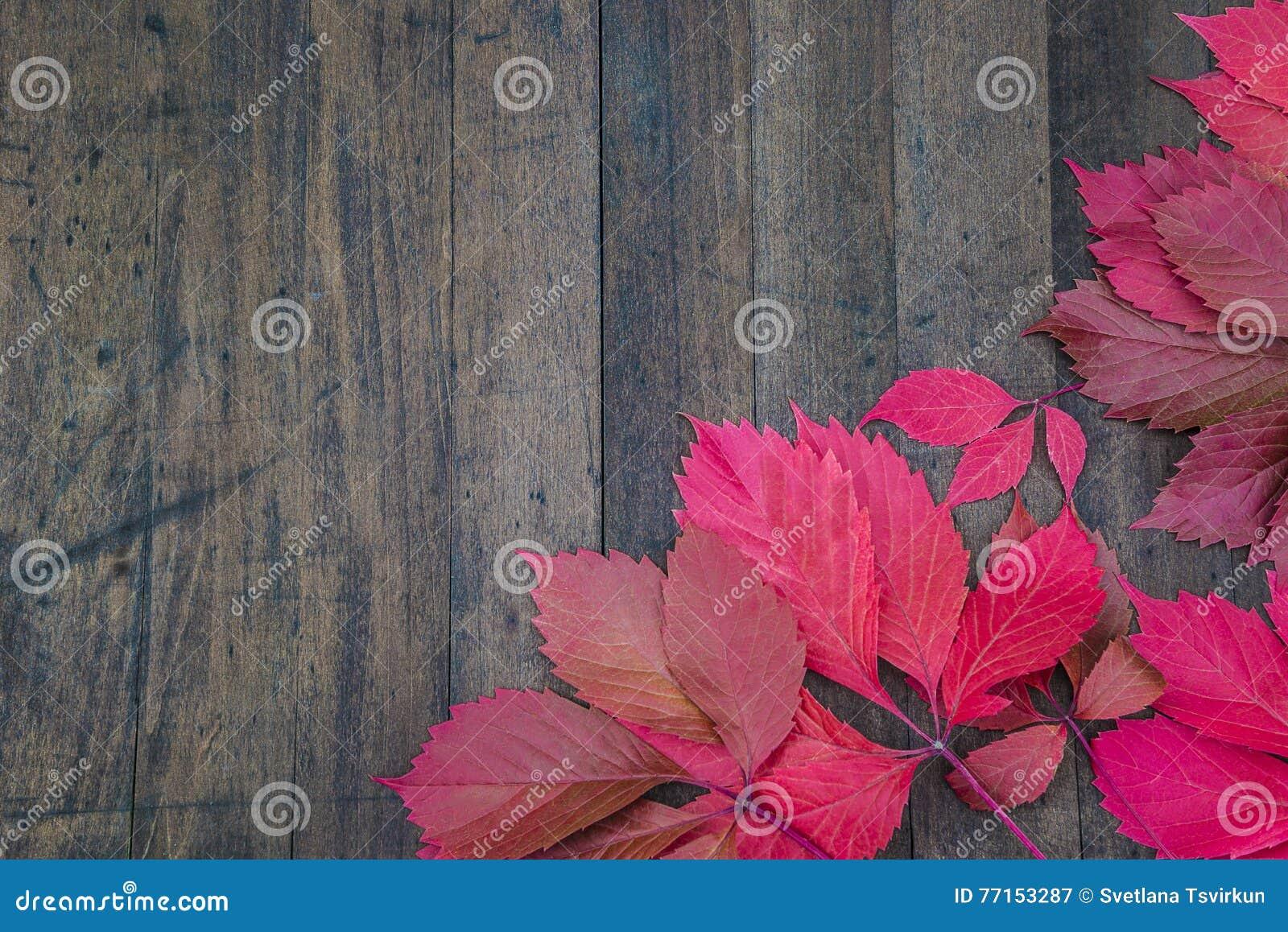 Composition d automne