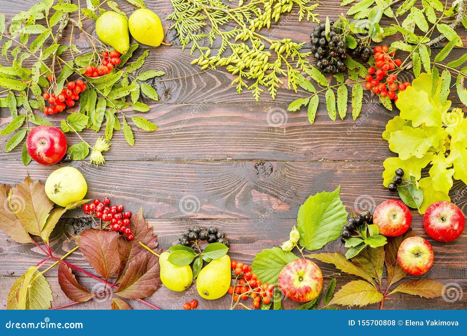 Composition d automne des feuilles juteuses lumineuses, poires, baies de sorbe, branches de thuja, pommes sur un fond en bois fon