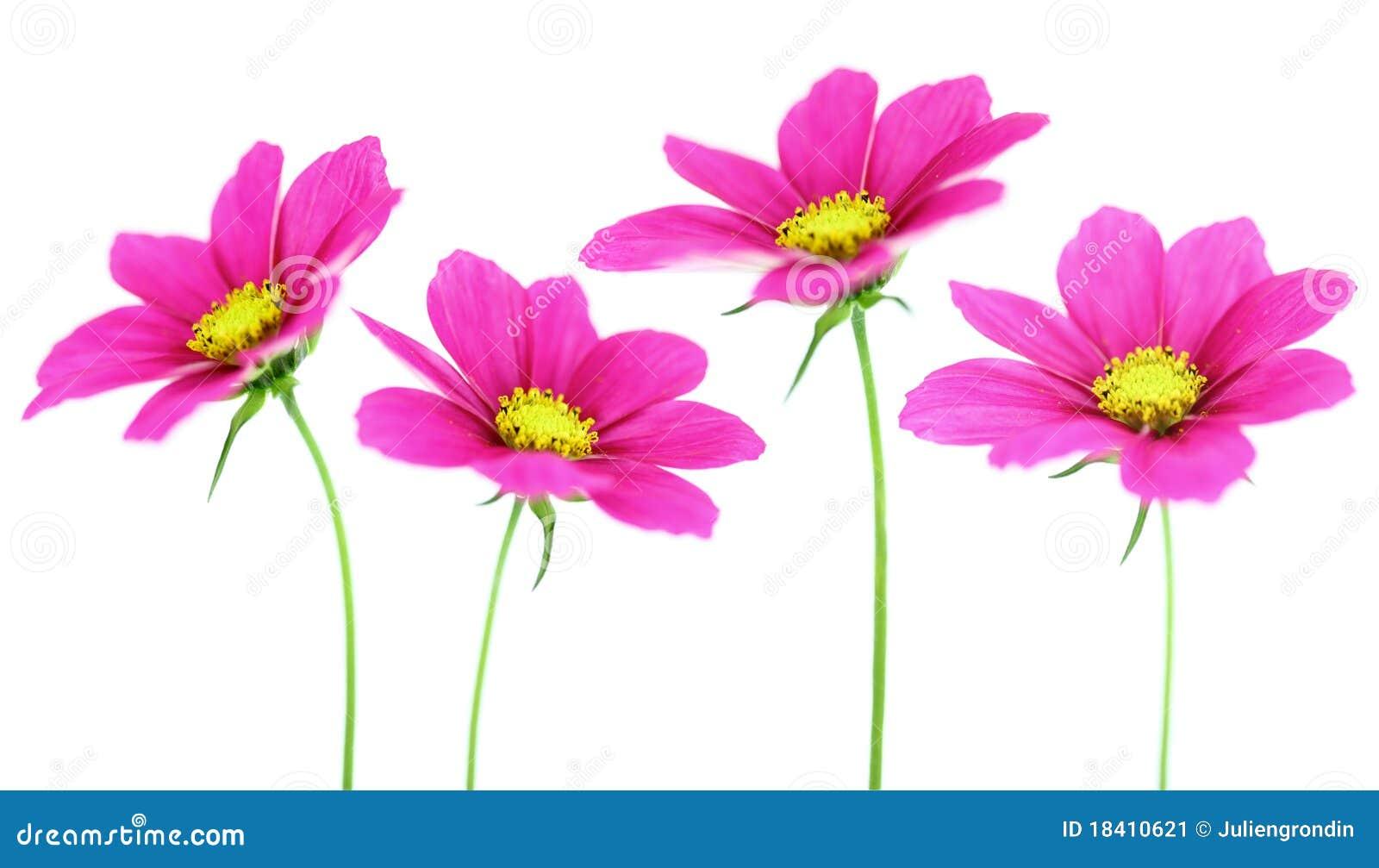 Composition de fleur image stock image 18410621 - Composition de fleur ...