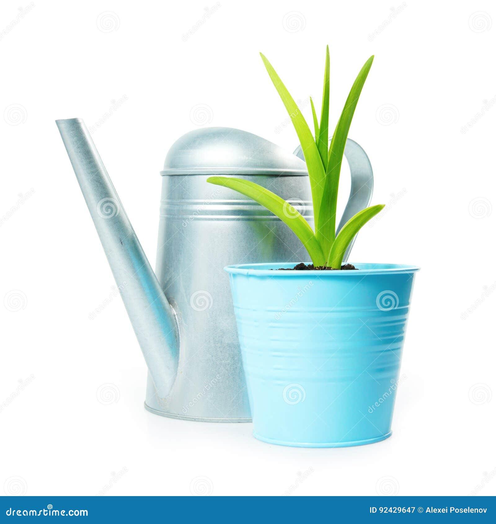 composition de jardinage avec la plante verte dans le pot de fleur