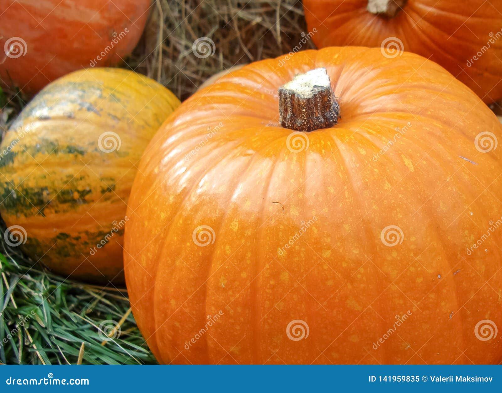 Composition en automne avec les potirons oranges sur l herbe