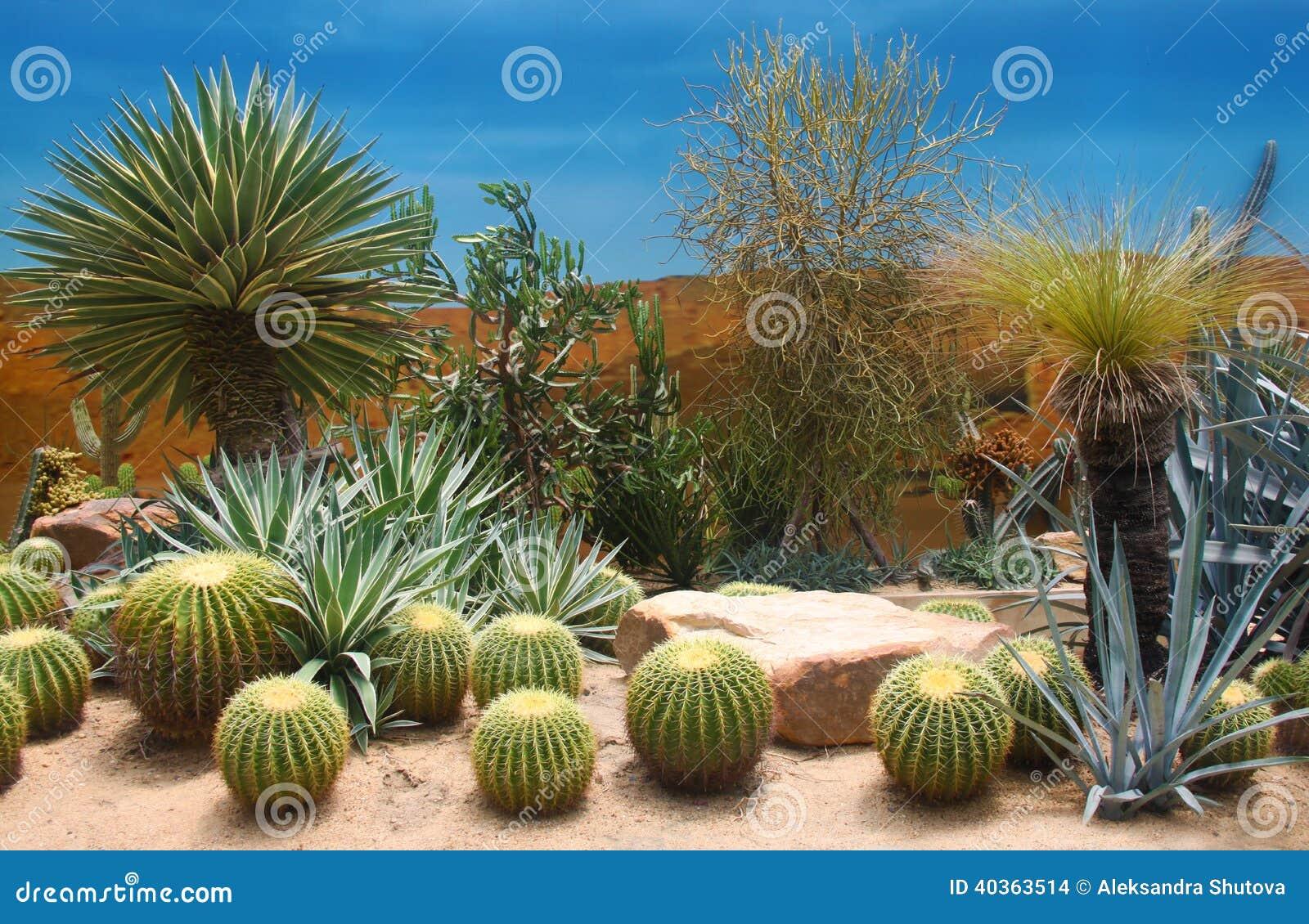 composition en cactus photo stock image 40363514. Black Bedroom Furniture Sets. Home Design Ideas