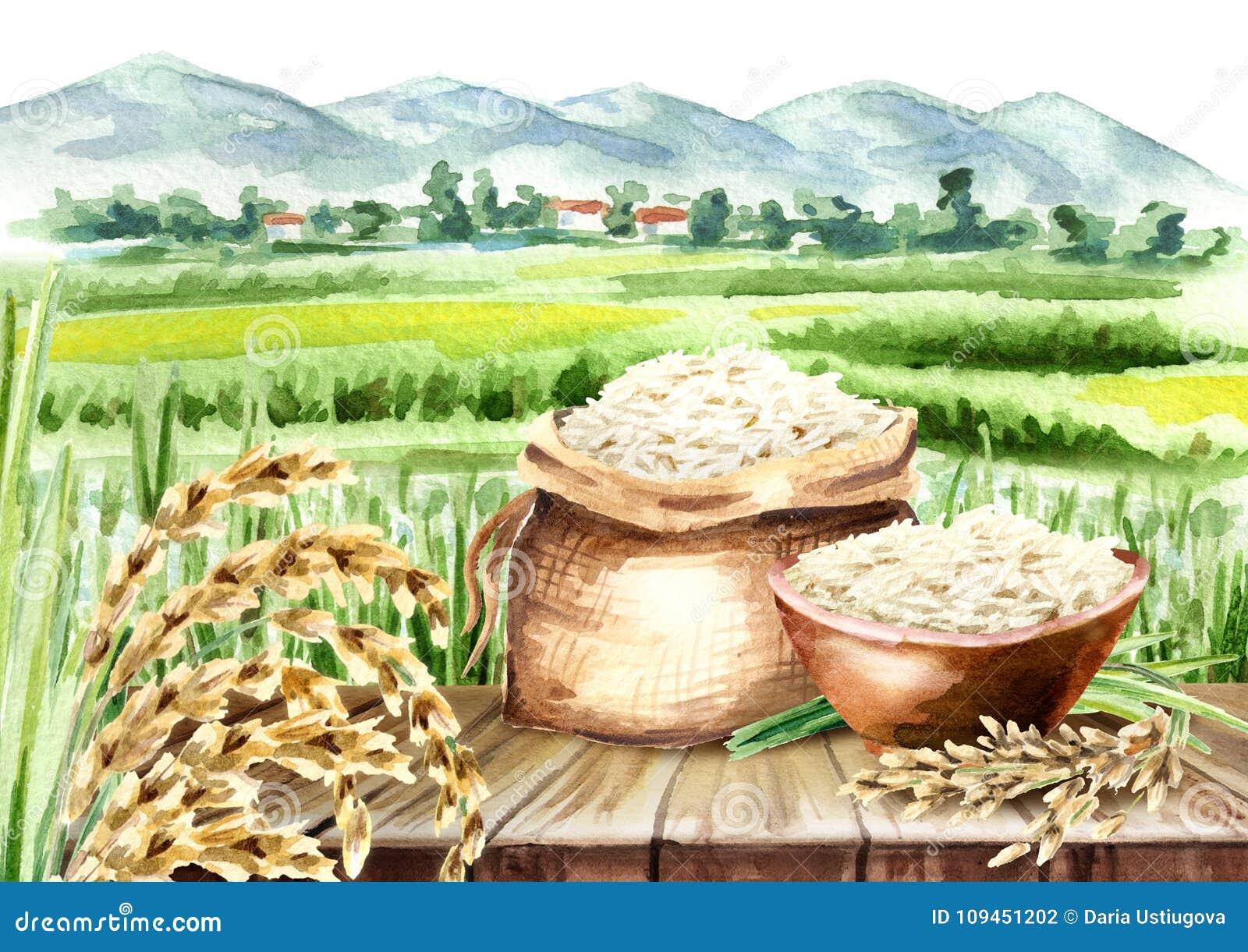 Composition en riz dans le paysage avec le champ Aquarelle tirée par la main