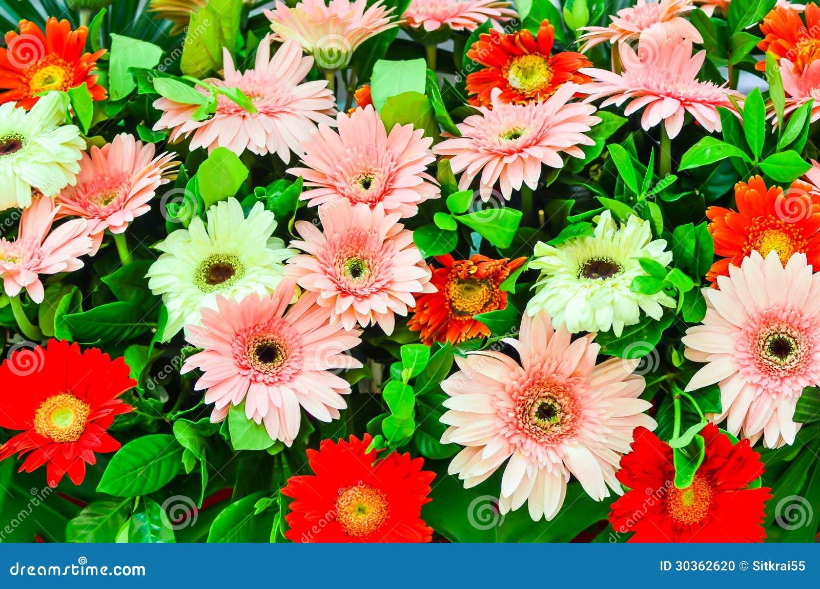 composition florale avec le gerbera photo stock image 30362620. Black Bedroom Furniture Sets. Home Design Ideas