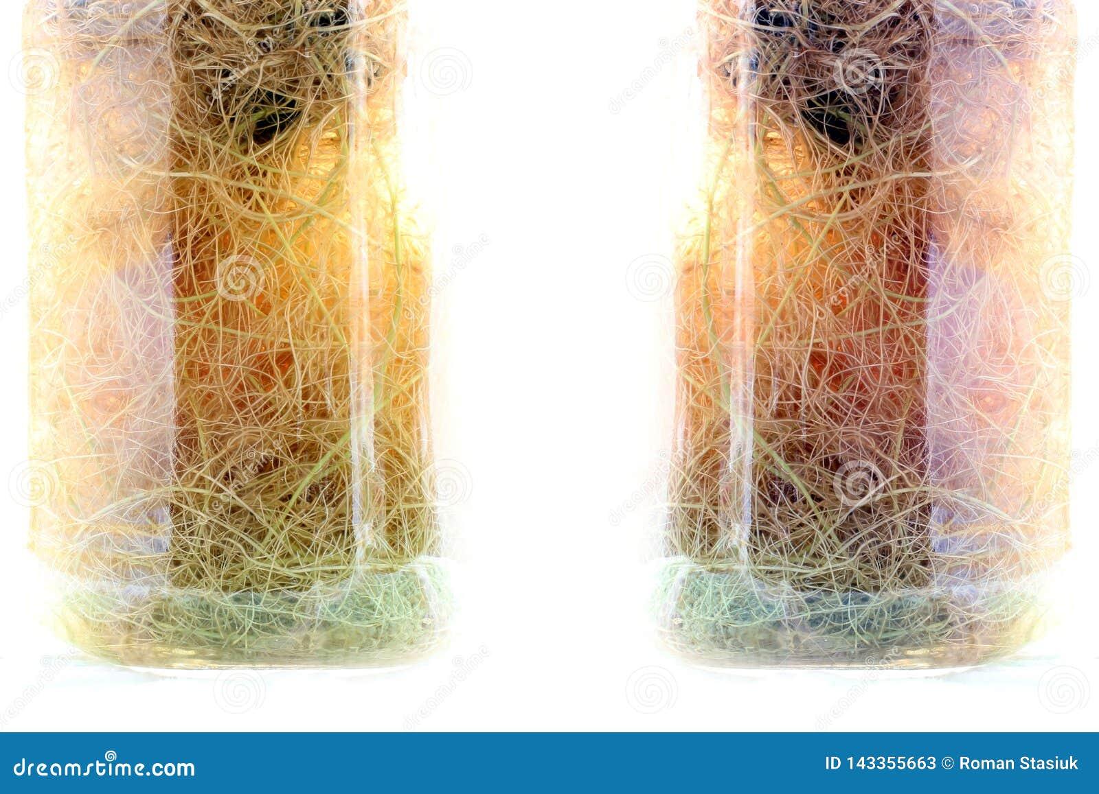Composition in a glass vase. Decorative vase