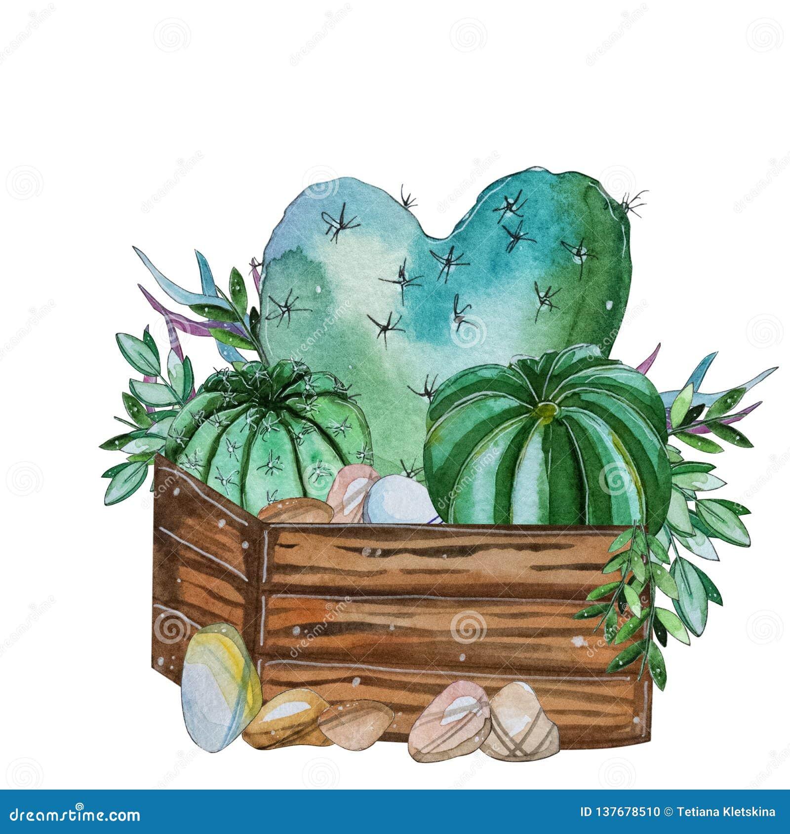 Composition Peinte à La Main En Usine De Cactus Daquarelle