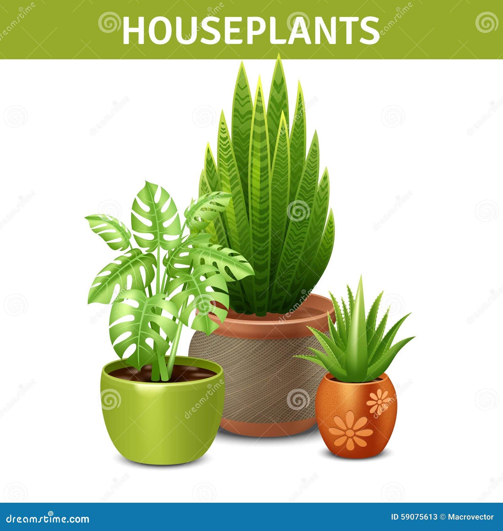 Composition réaliste en plantes d intérieur