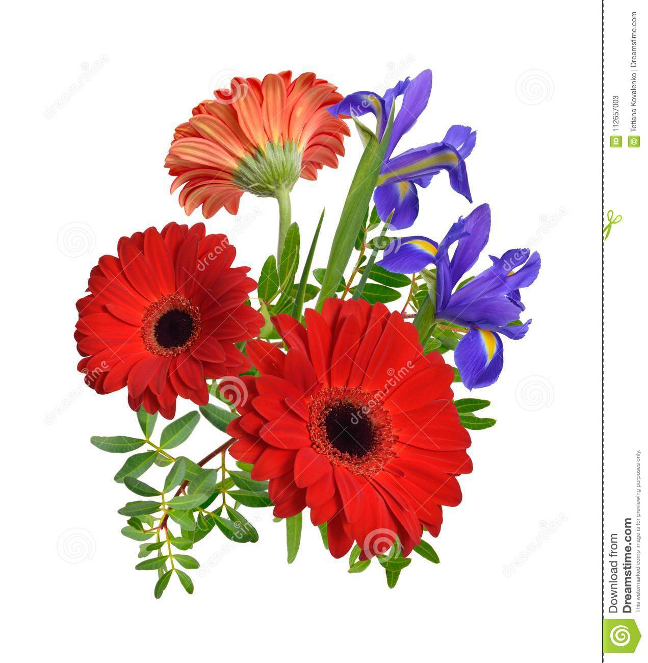 Composition With Red Gerbera And Iris Flowers. Isolated. Stock Image ...