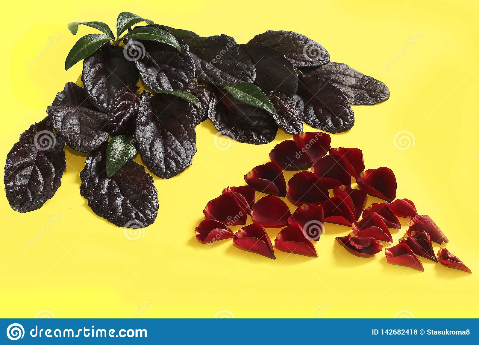 The composition of rose petals on a yellow background