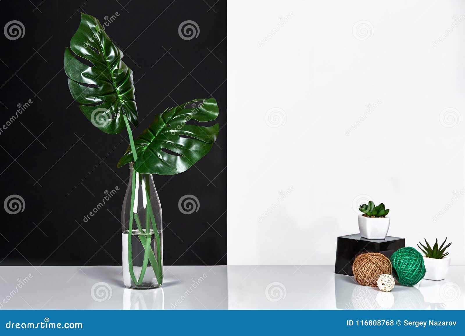 Composizione Foglie verdi in bottiglia su fondo bianco e nero Vista frontale, spazio della copia