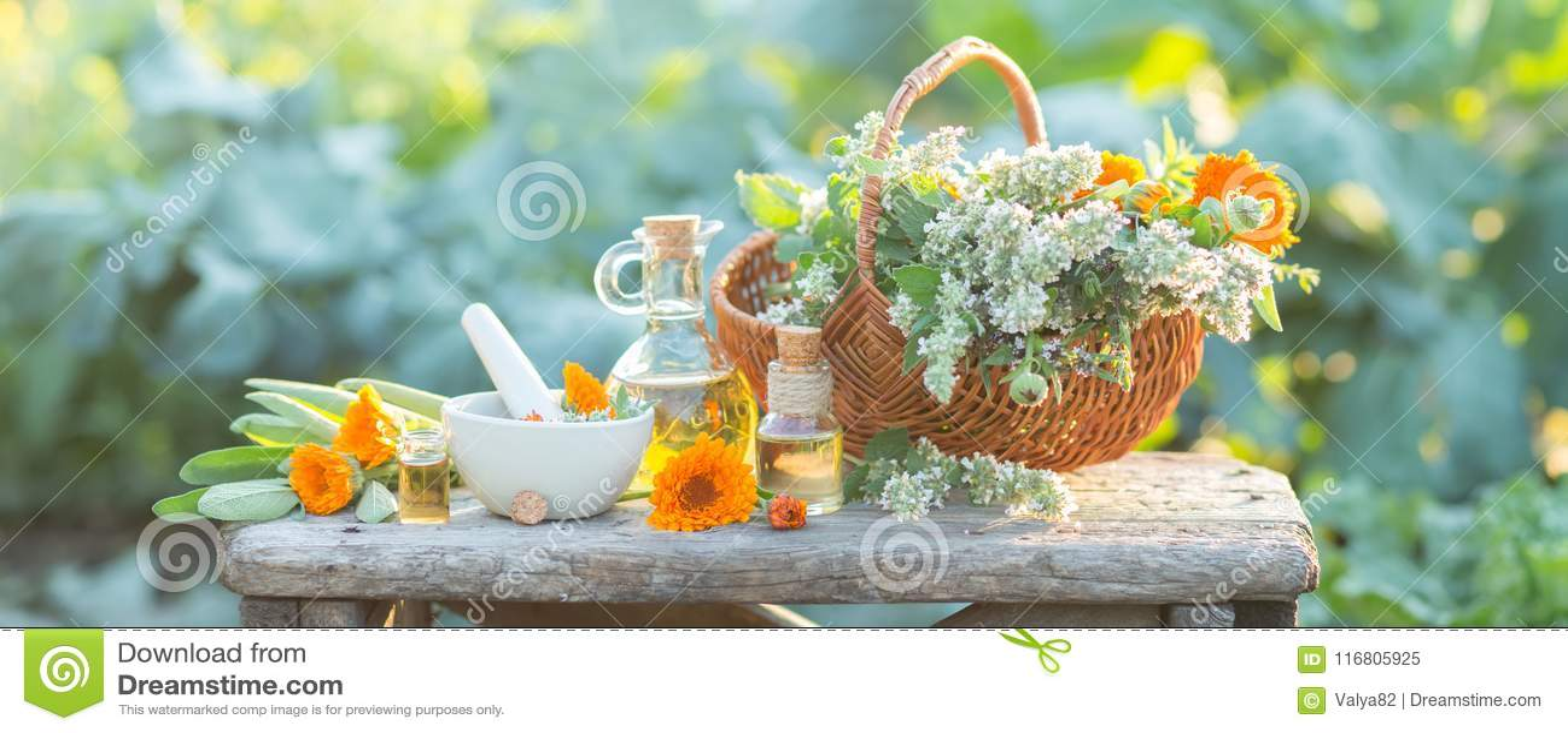 Composizione nella stazione termale con le erbe fresche, la calendula ed i tipi differenti di oli