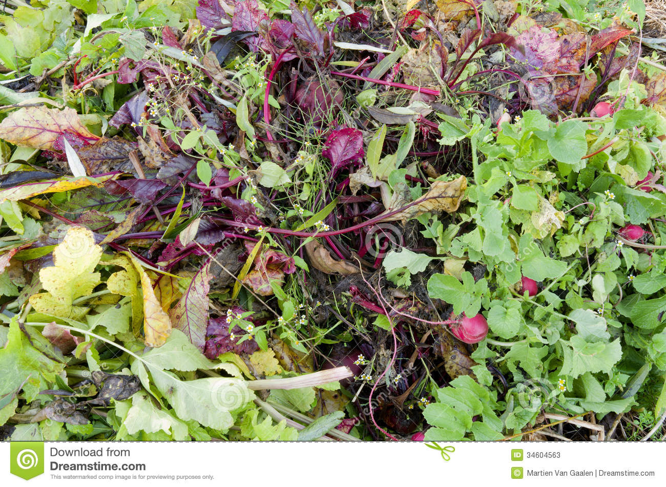 A compost heap with plant remains stock photos image for Dream plants for the natural garden