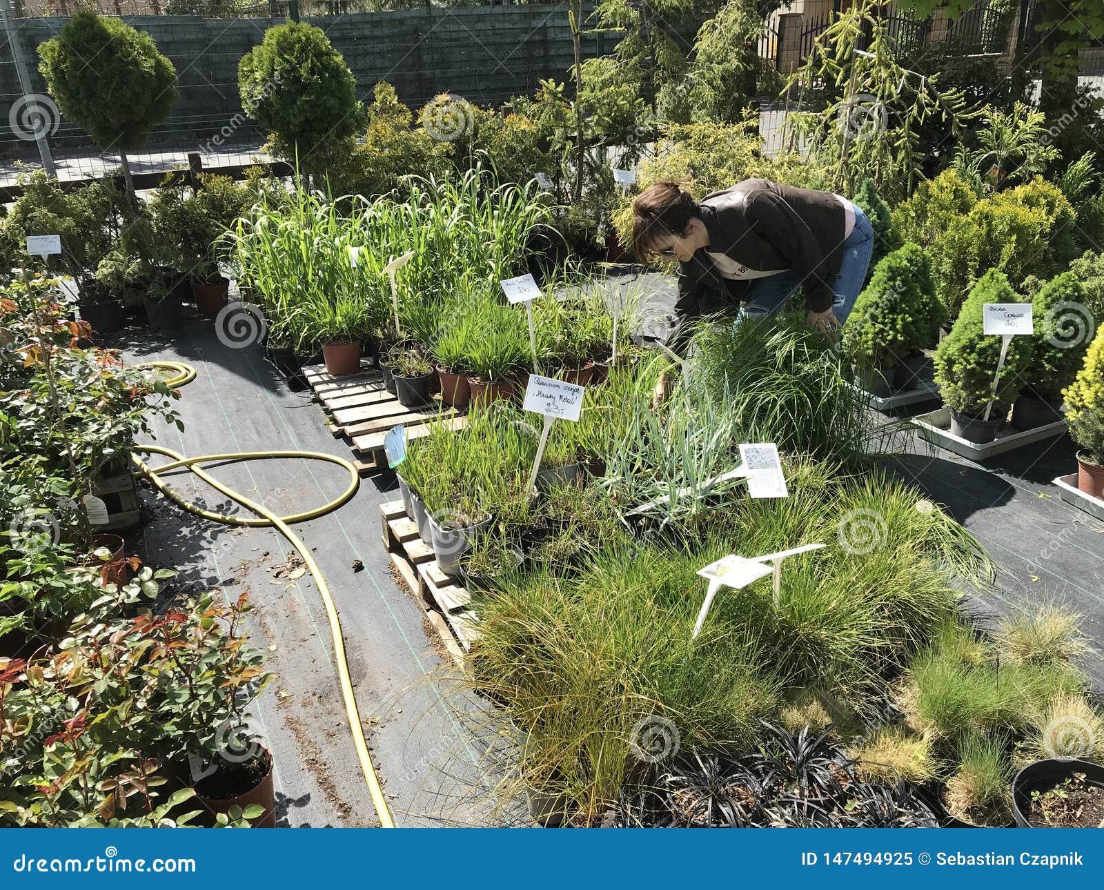 Compras de la mujer para las nuevas plantas y flores en cultivar un huerto y el vendedor al aire libre de las plantas