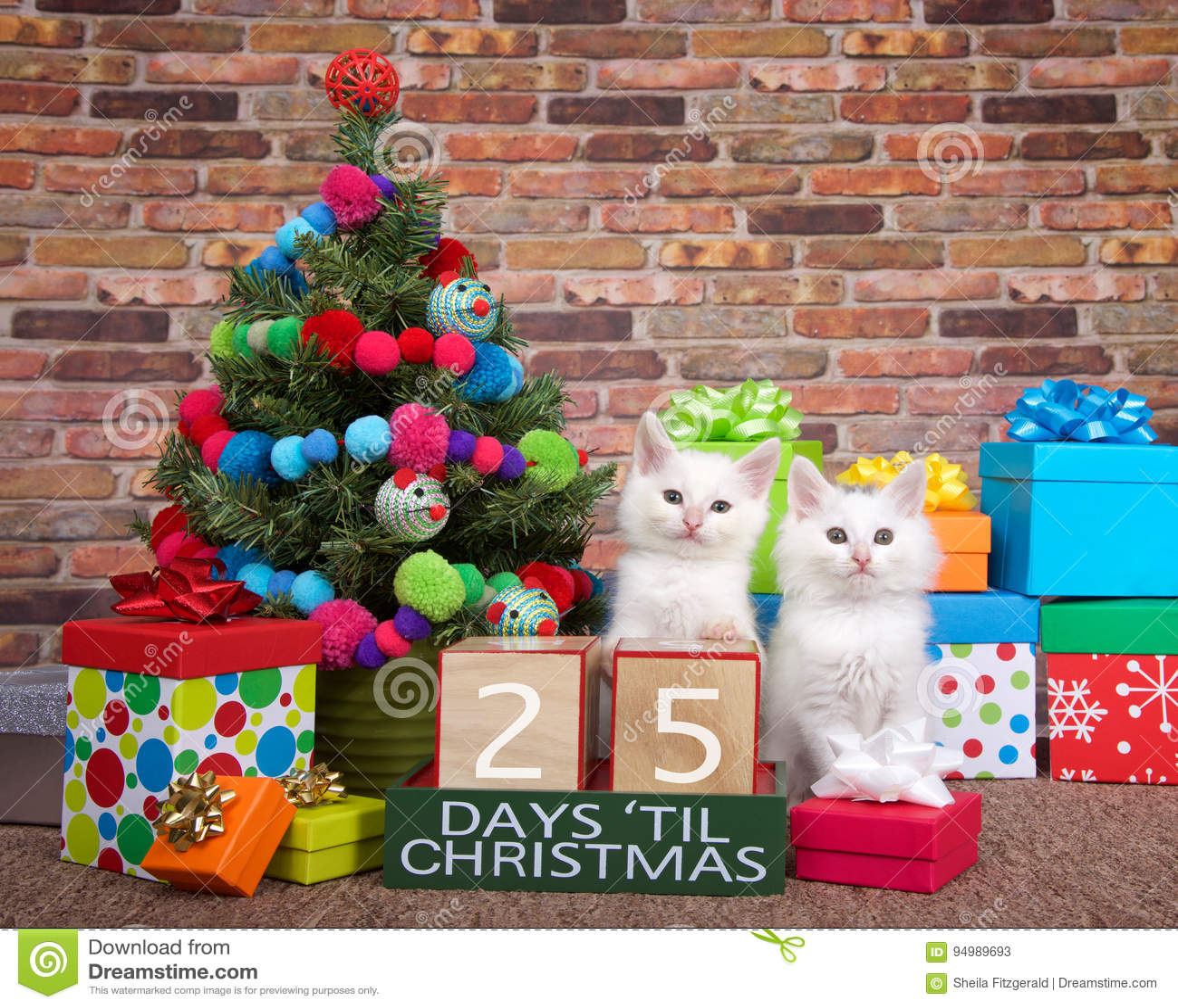 Compte à rebours de chaton à Noël 25 jours