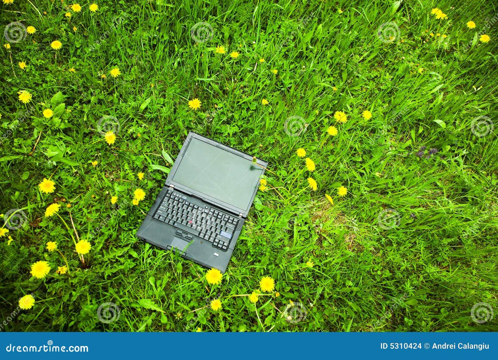 Download Computer portatile in erba fotografia stock. Immagine di lavoro - 5310424