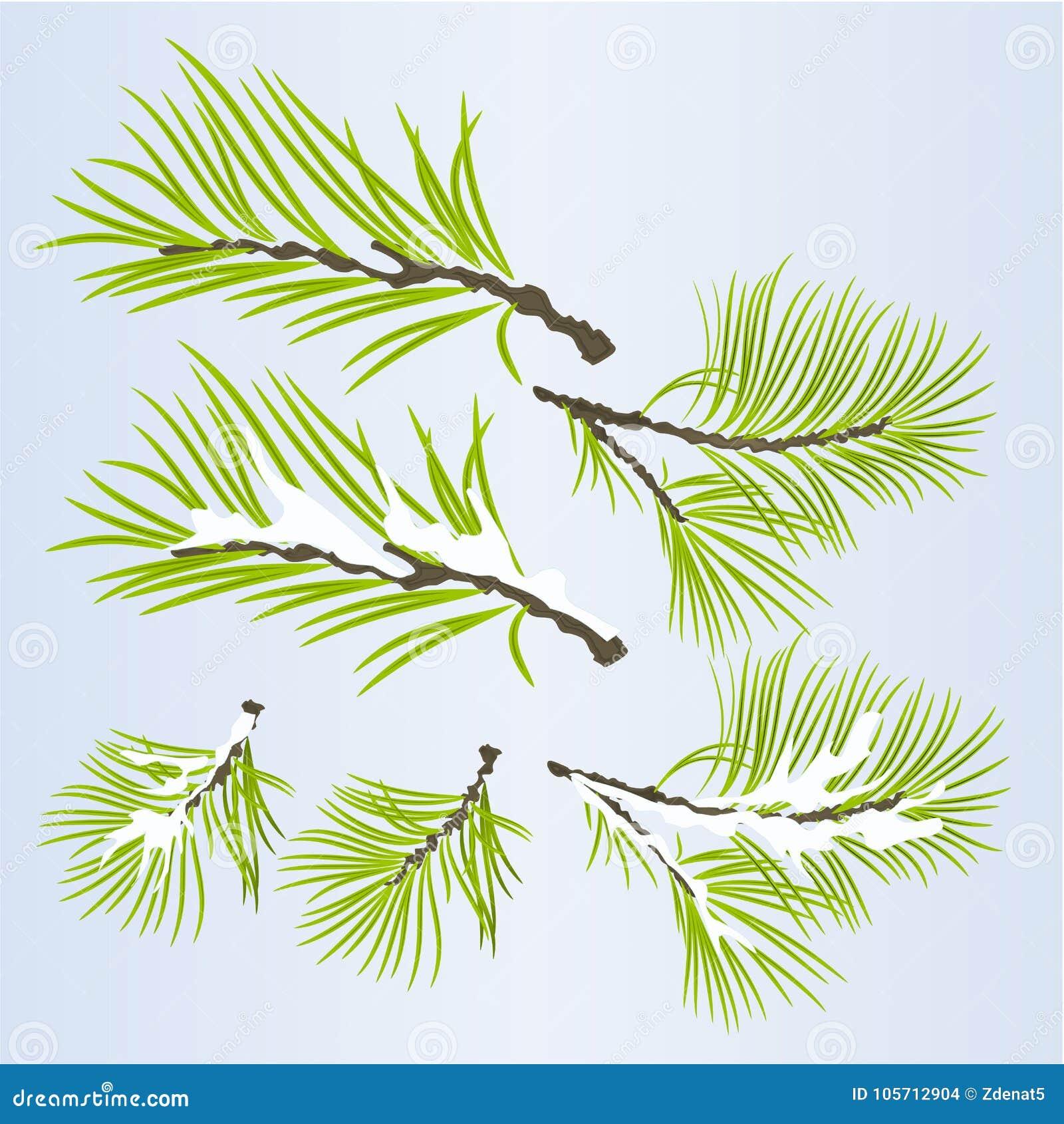 Conífera enorme de las ramas de árbol de pino otoñal y ejemplo nevoso del vector del fondo natural del invierno editable