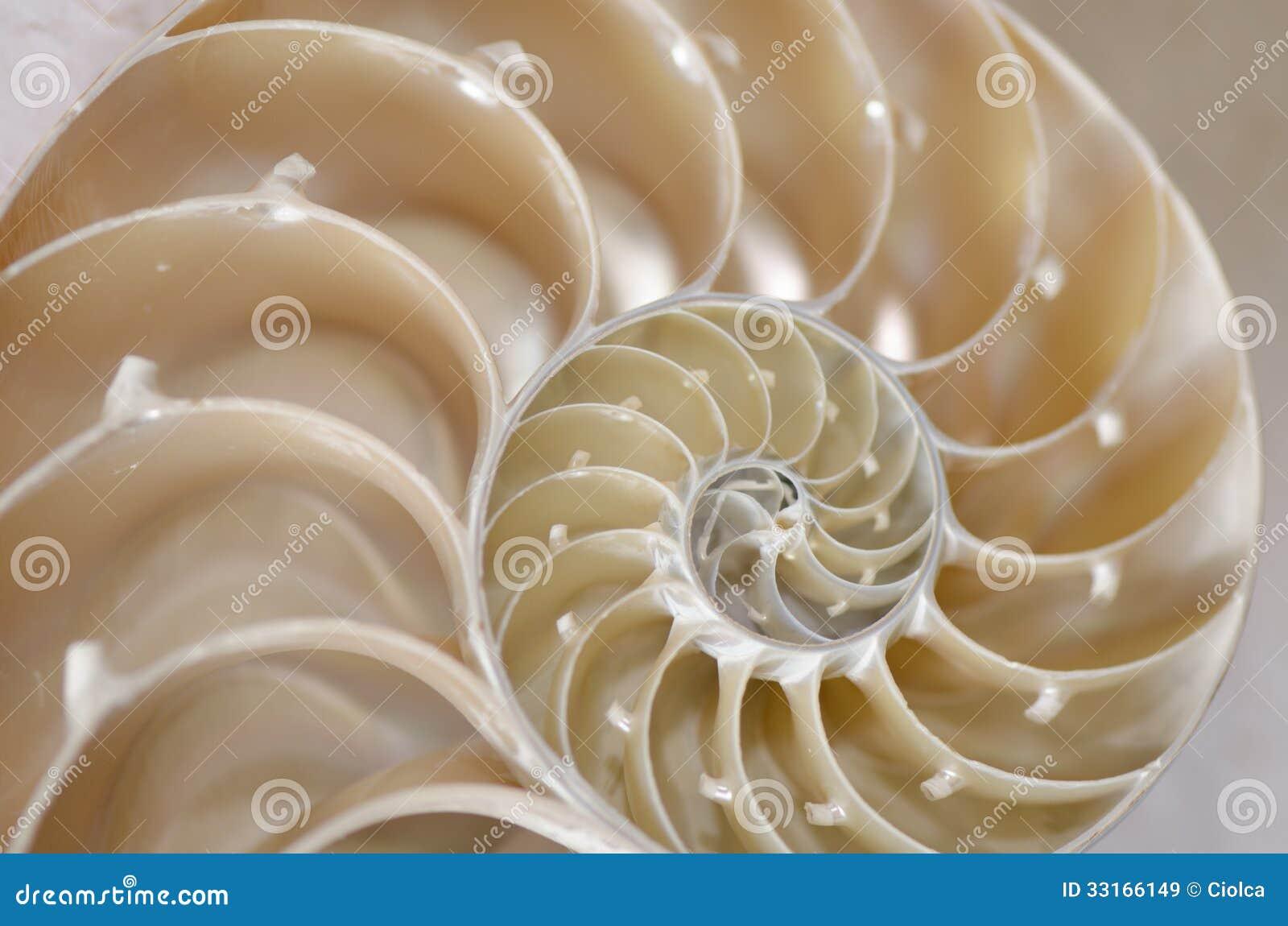 Conca della lumaca di mare