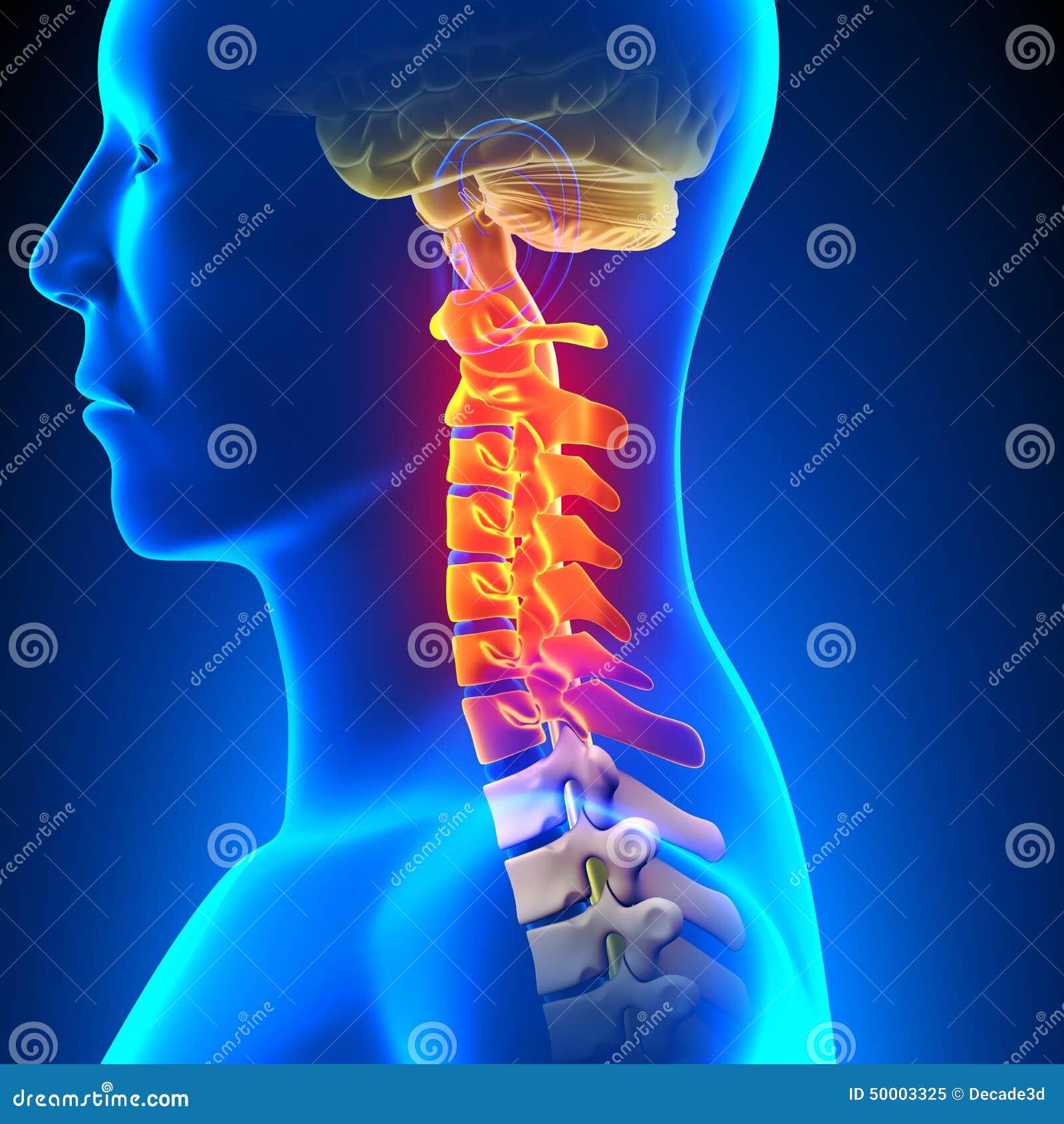 Conceito cervical da dor da anatomia da espinha