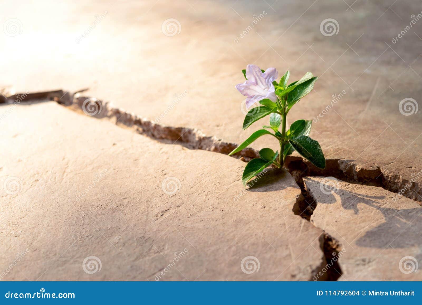 Conceito crescente da quebra ascendente do assoalho da planta