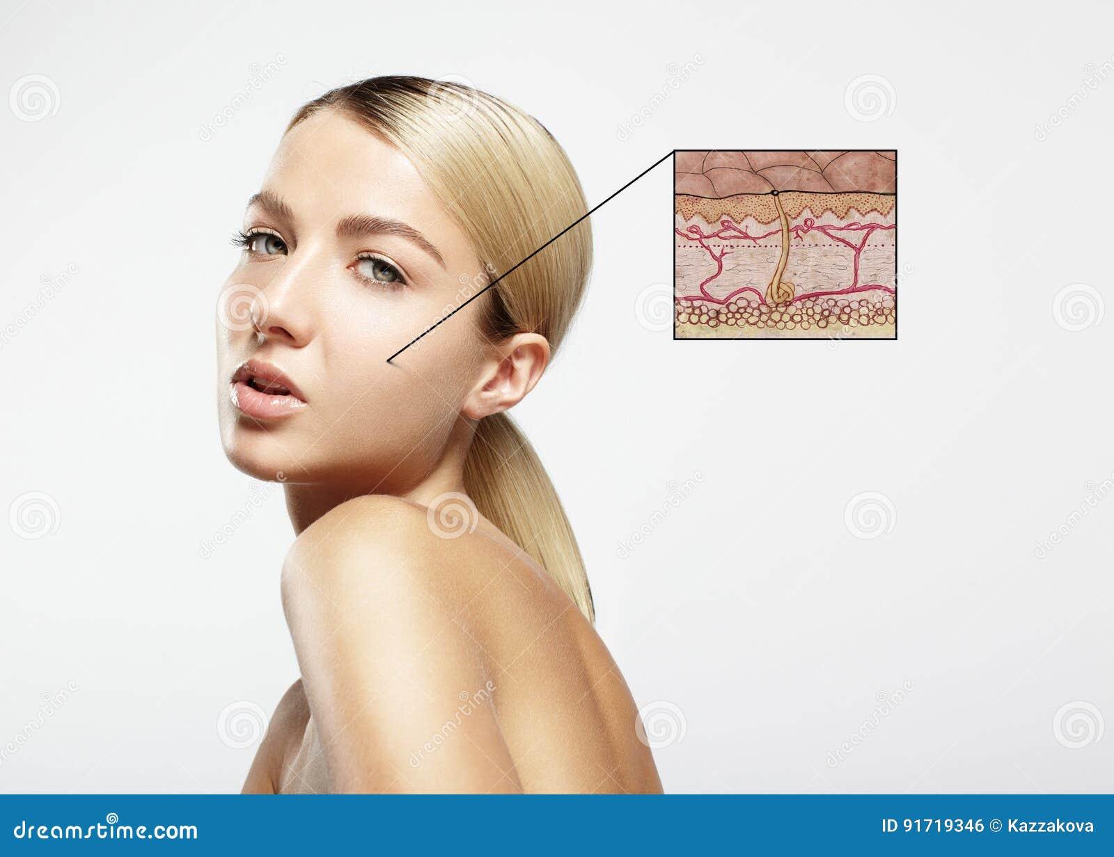 Conceito da estrutura da pele
