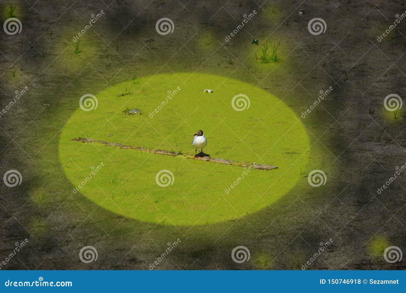 Conceito da gaivota coberto de vegetação da poluição ambiental da ecologia em uma lagoa suja