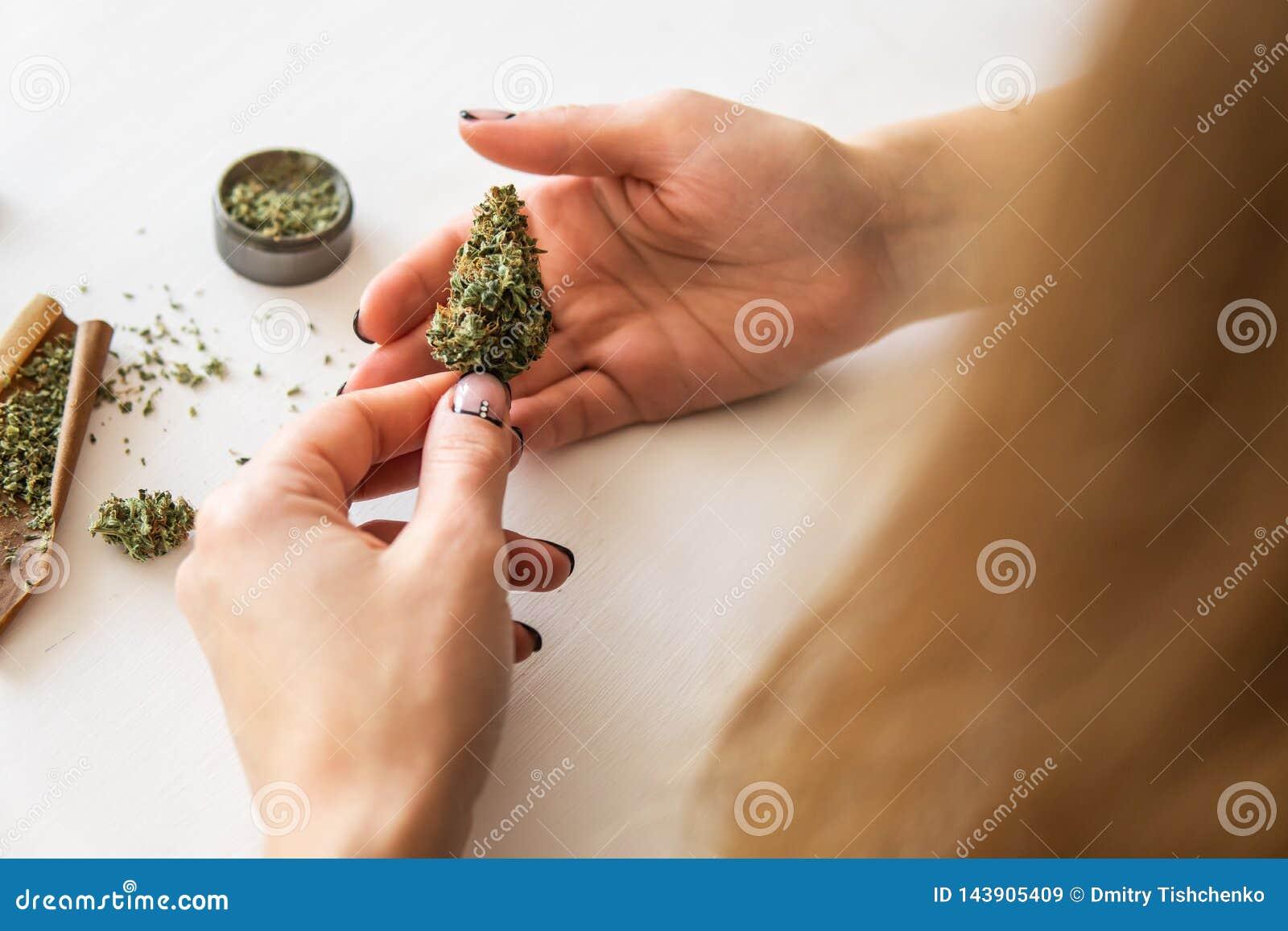 Conceito do uso da marijuana Mulher que rola um cannabis sem corte no fundo branco Junção de preparação e de rolamento da mulher