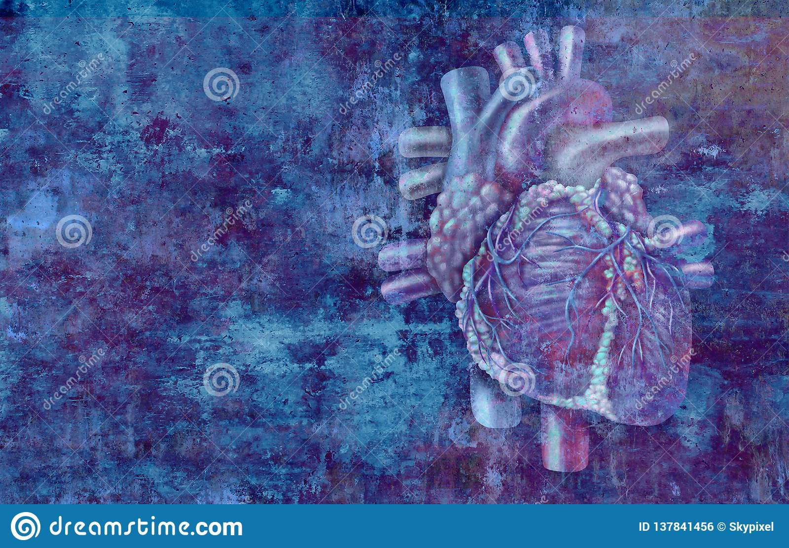 Conceito humano do coração