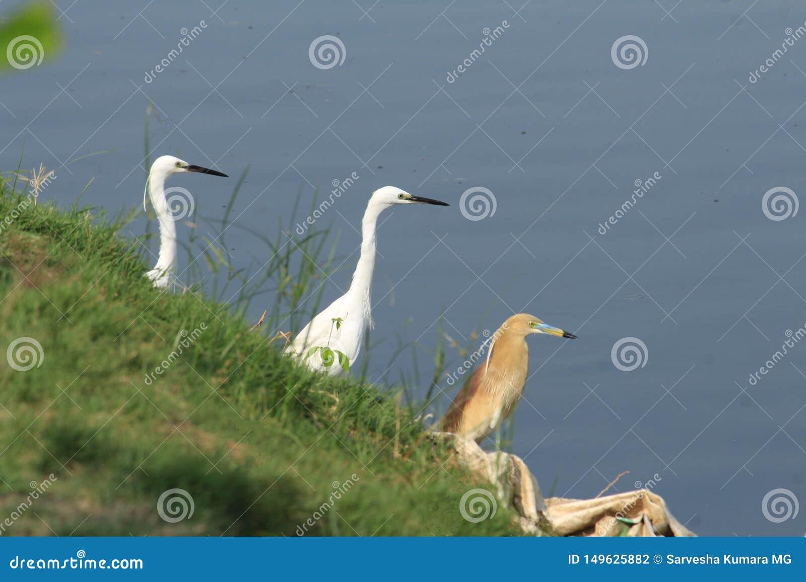 Concentratiekamp van vogels bij een baai