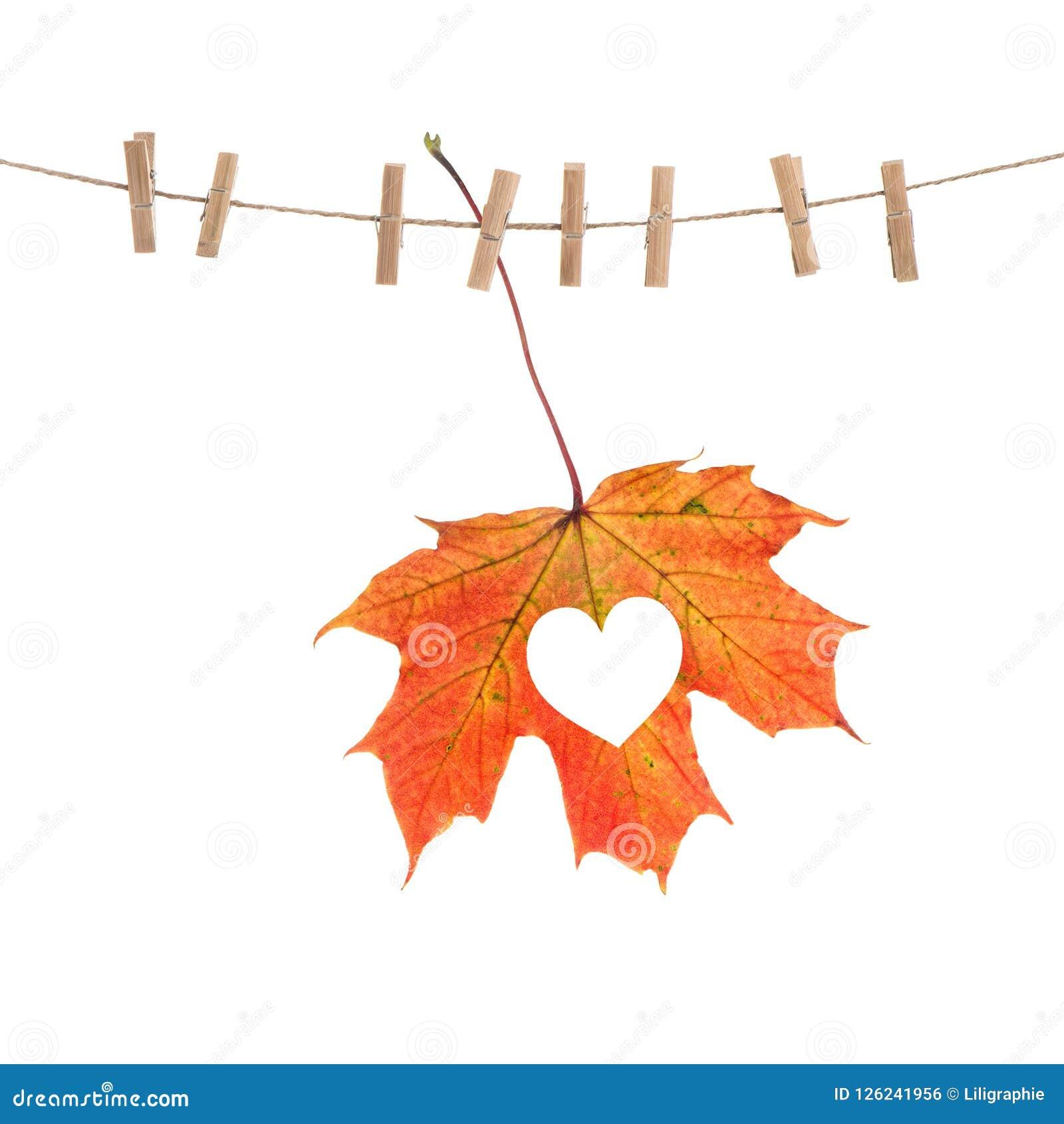 Concept d amour de coeur de feuille d érable rouge d automne