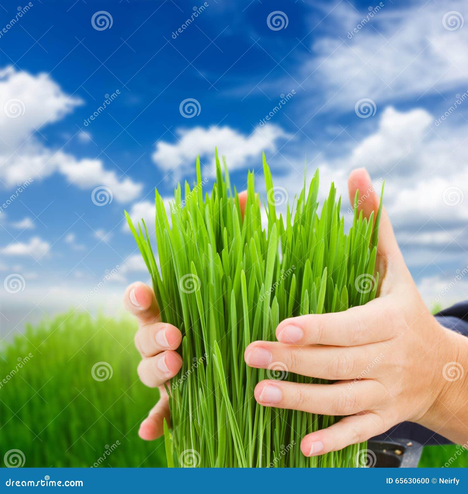Concept de protection d écologie