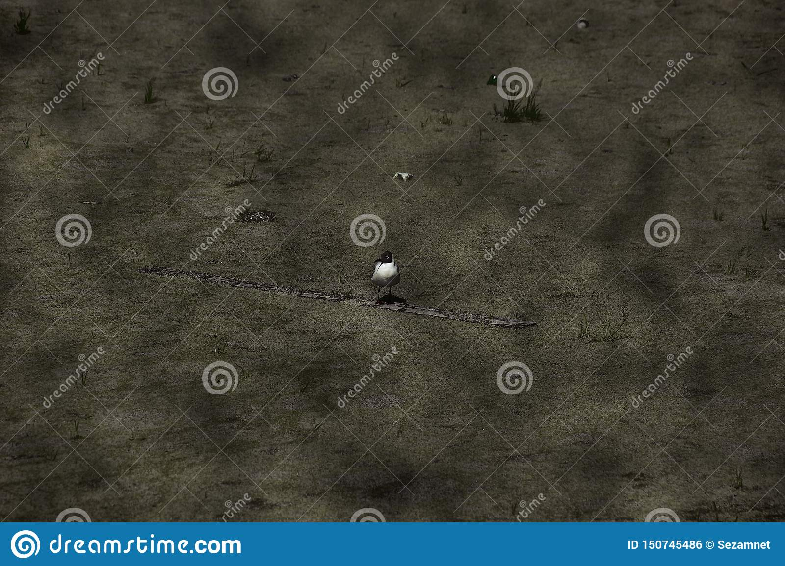 Concept of ecology environmental pollution overgrown Seagull on a dirty pond